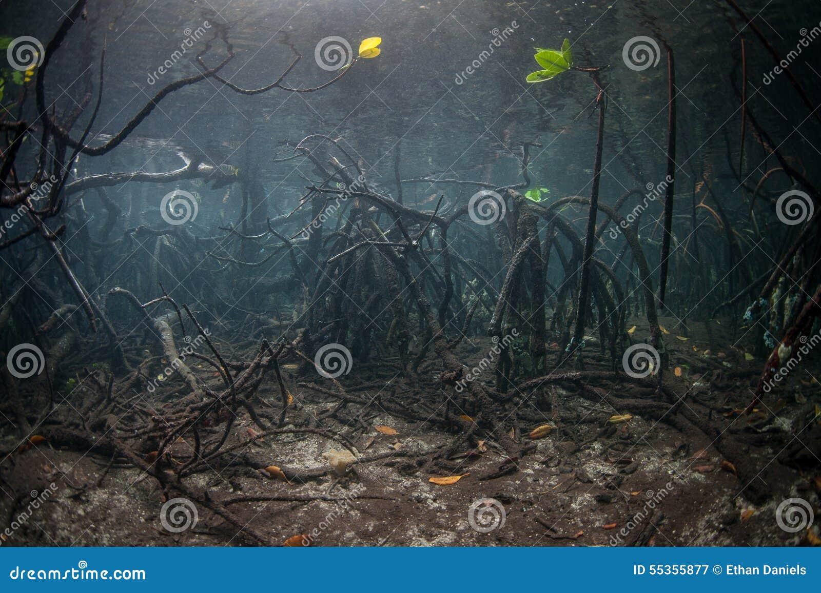 La mangrovia si pianta Underwater