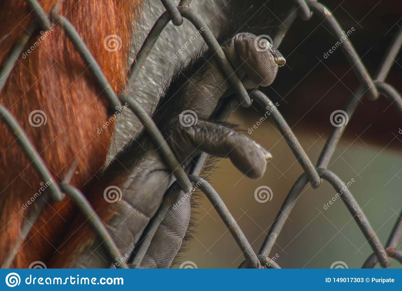 La mano del mono que sostiene la jaula