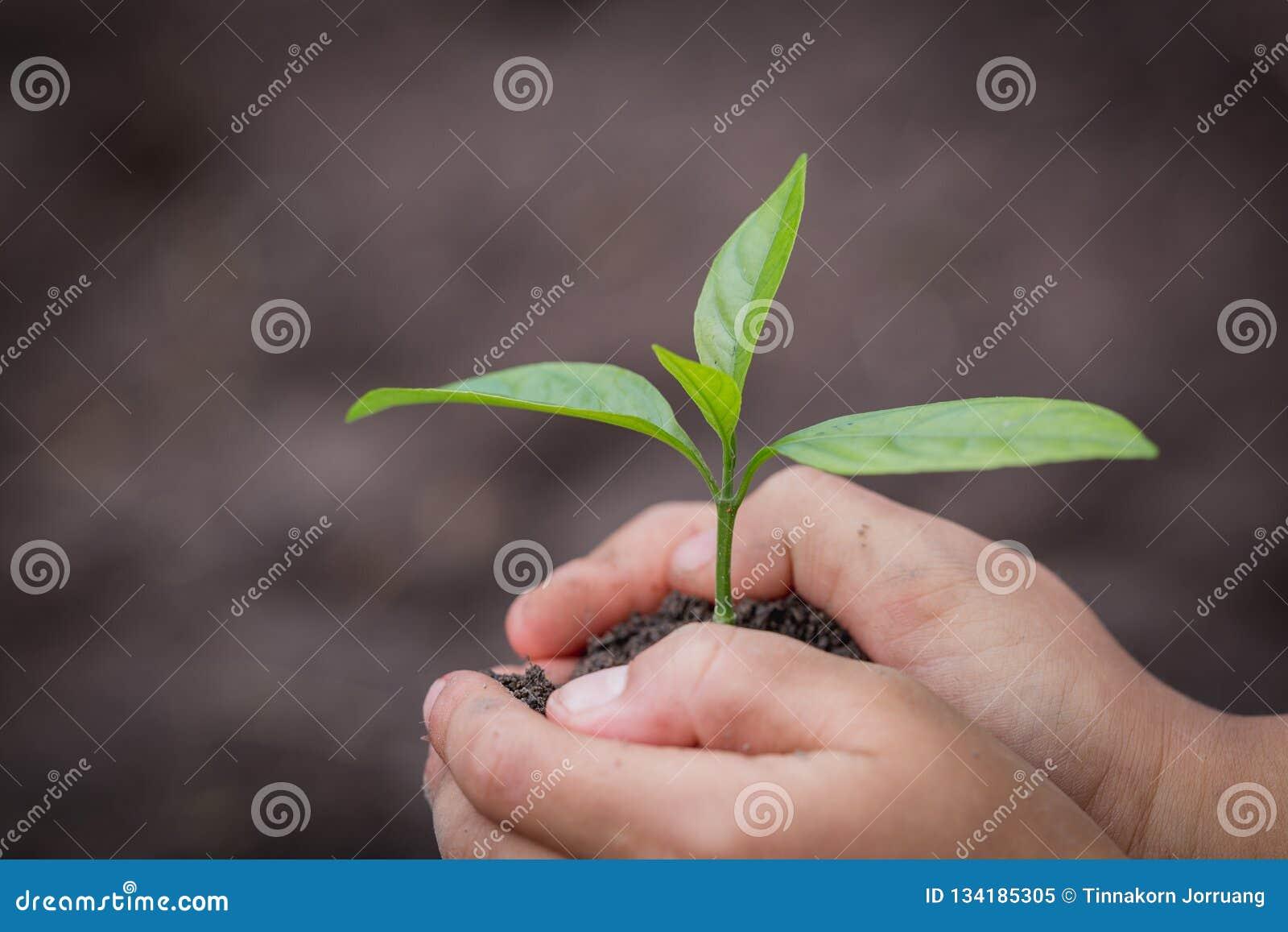 La mano del niño que sostiene un pequeño almácigo, planta un árbol, reduce el calentamiento del planeta, día del ambiente mundial