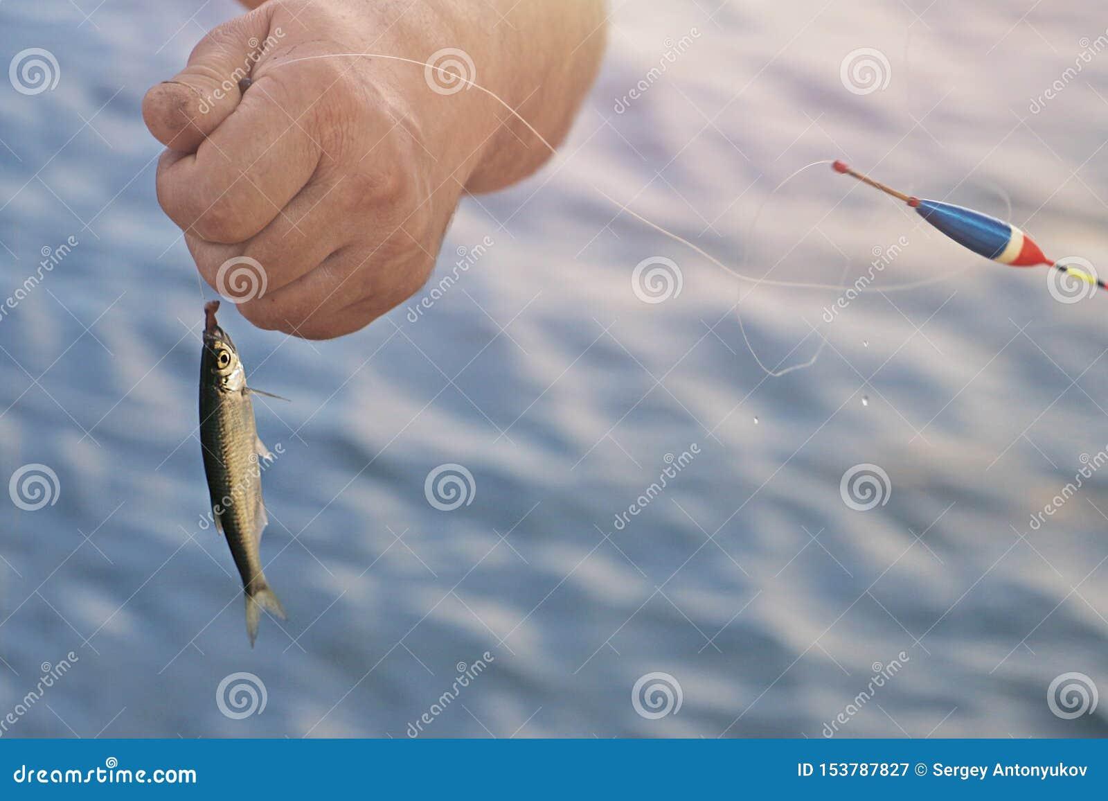 La mano del pescador está sosteniendo apenas pescados cogidos