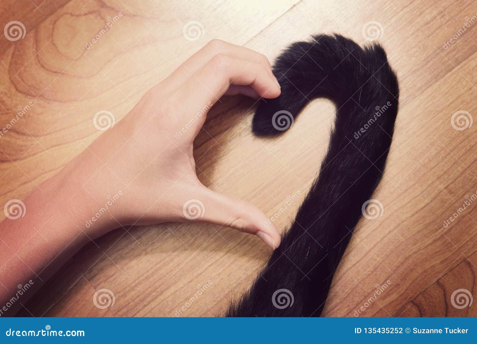 La mano e una stancia della persona che fa una forma del cuore