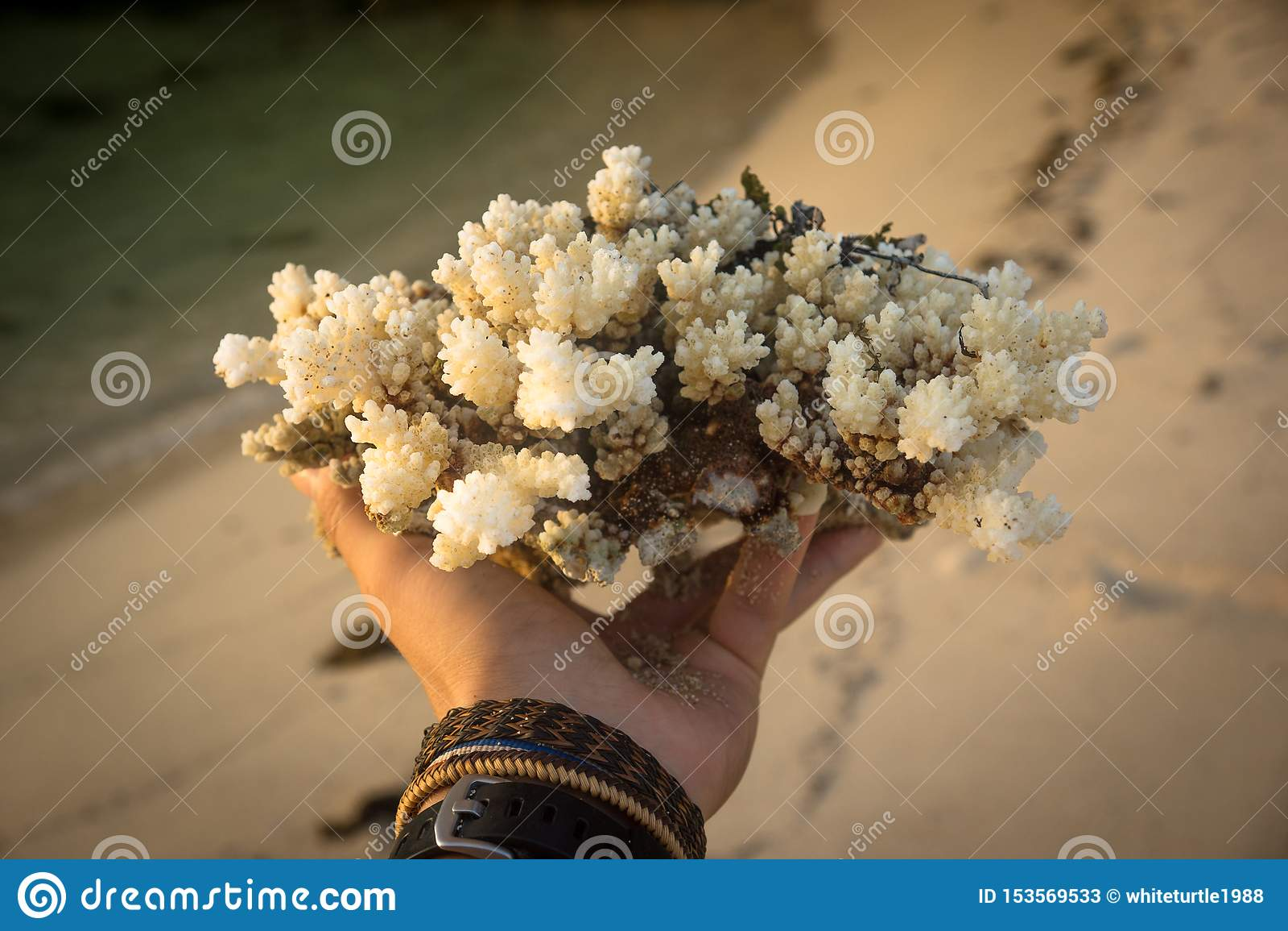 La mano ed i coralli in