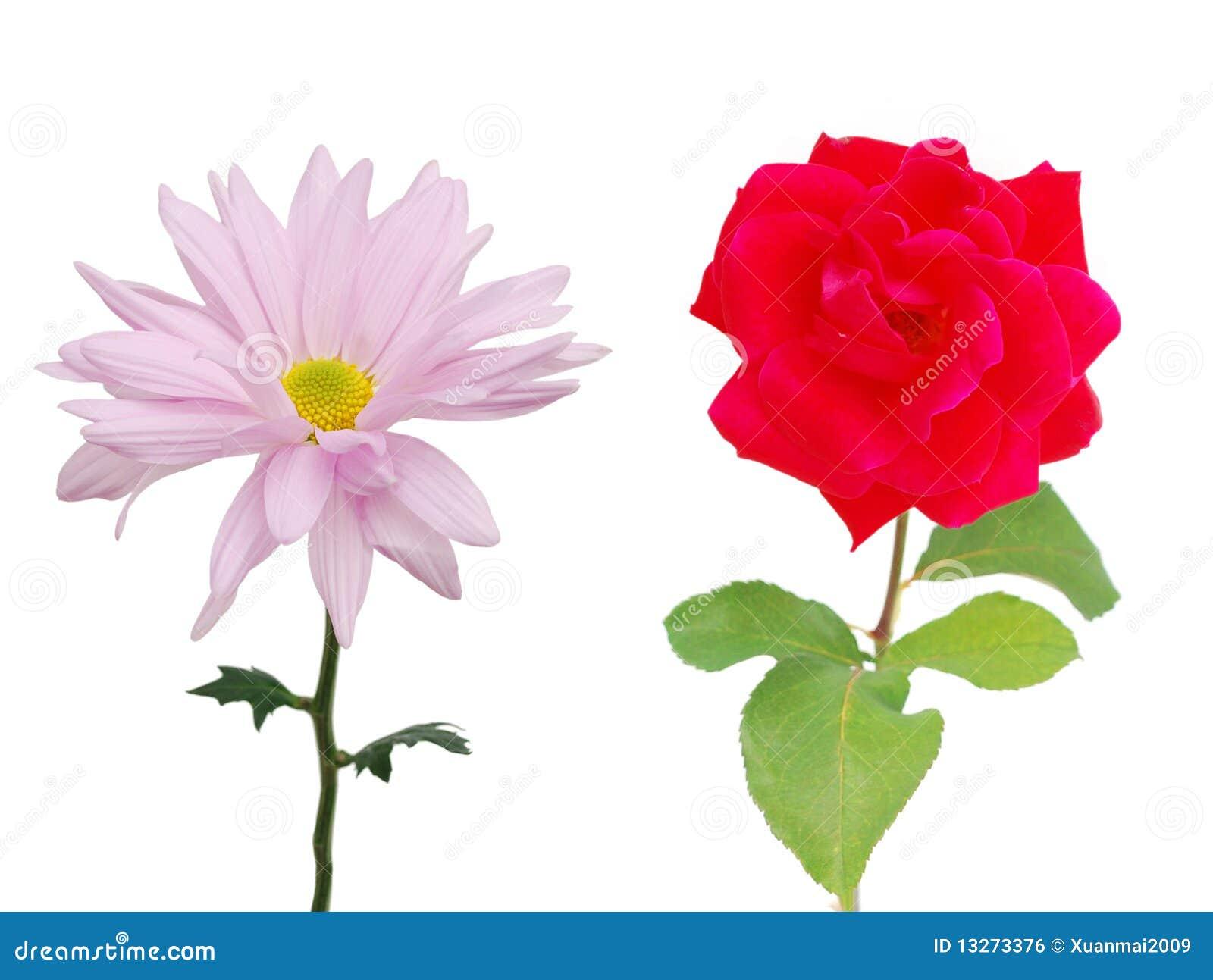 margherita e rosa