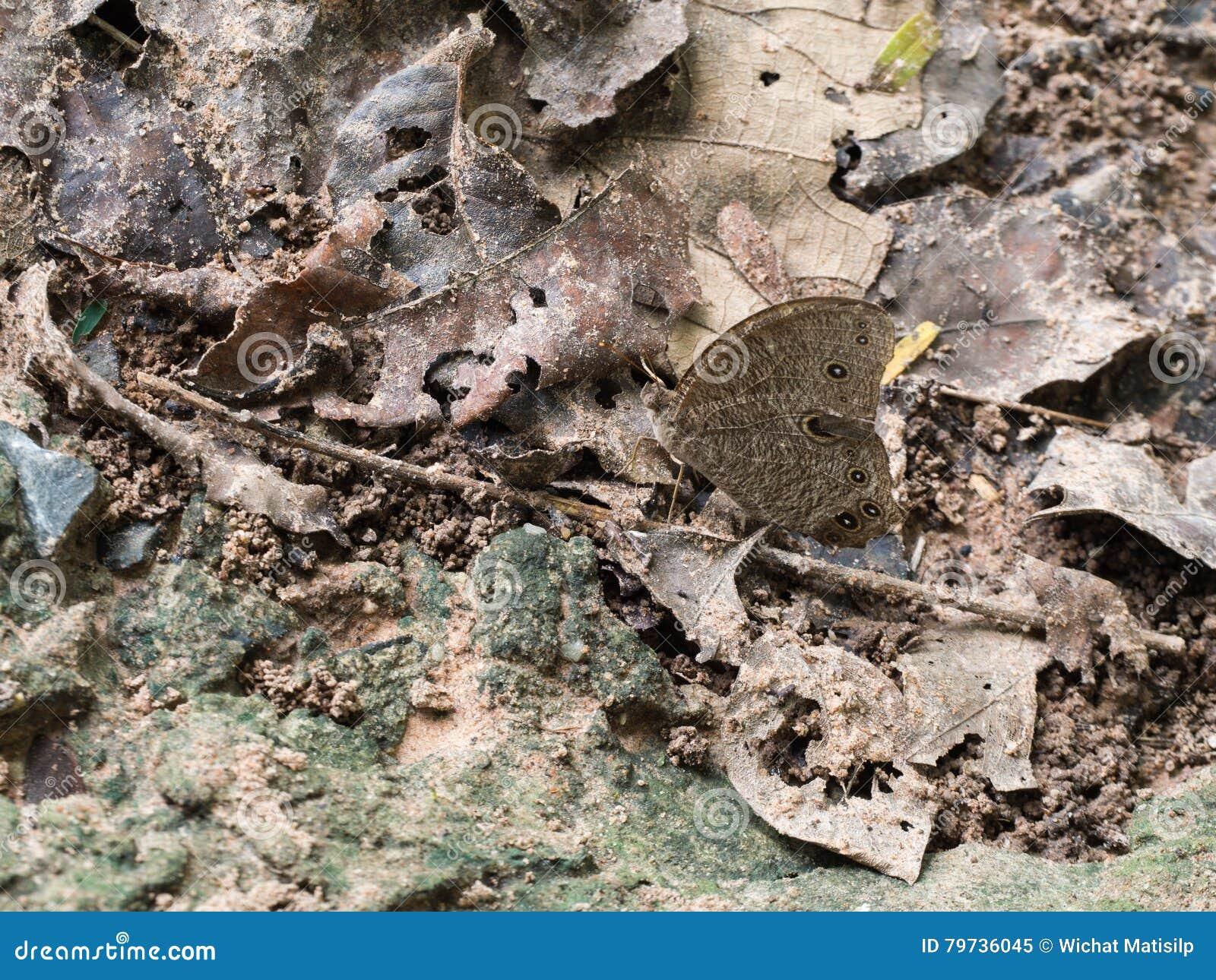La mariposa mezcla adentro con el ambiente