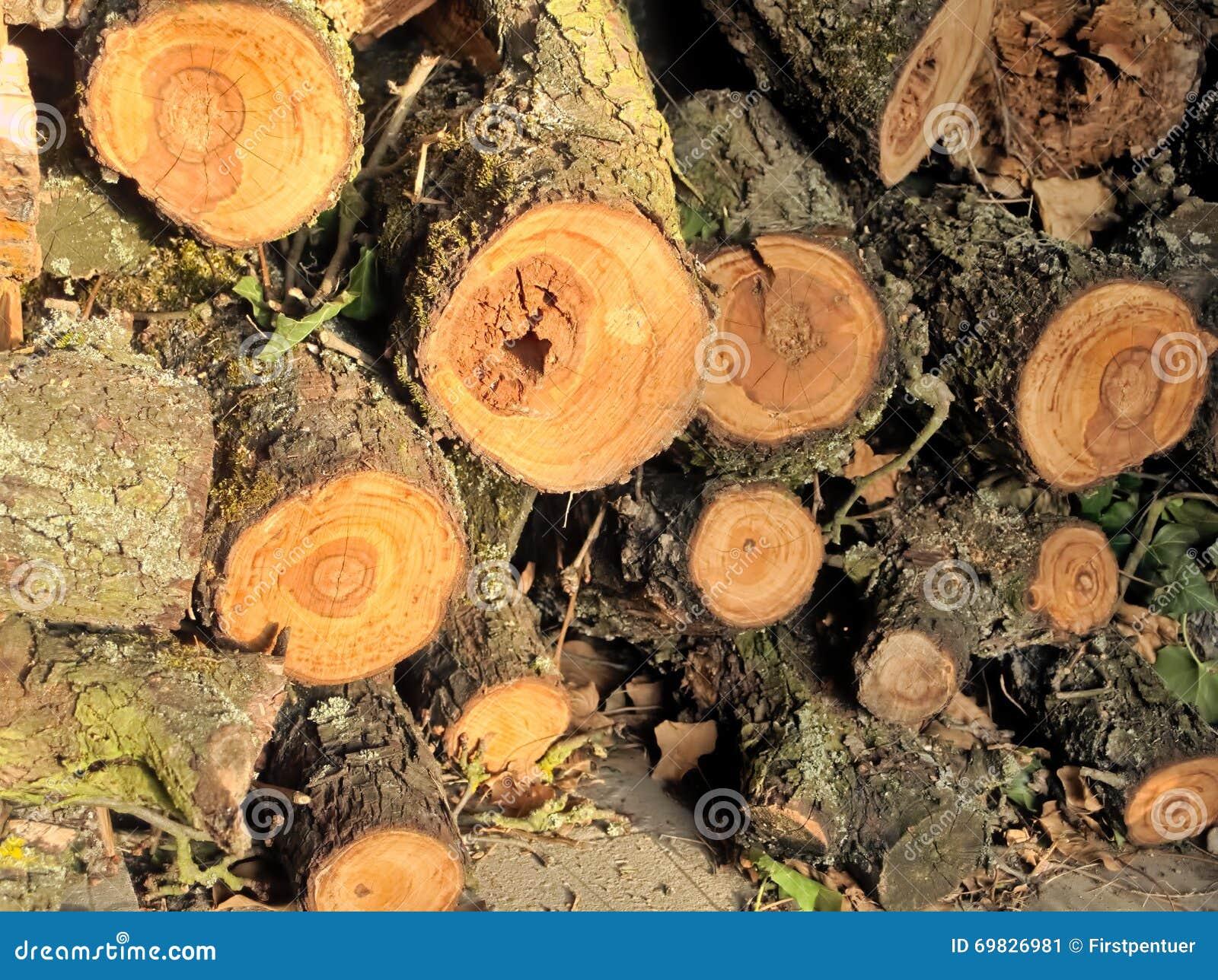La Masse Des Rondins En Bois A Coupé Avec Des Anneaux De