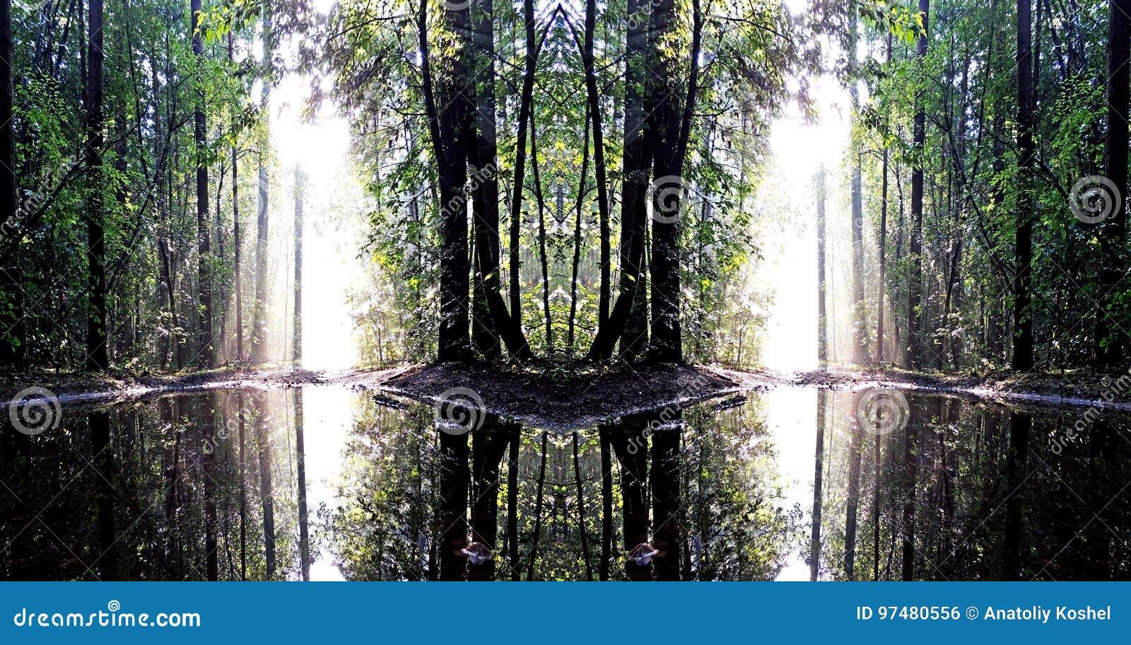 La mattina dopo pioggia nella foschia luminosa della foresta A e un sole luminoso sono riflessi