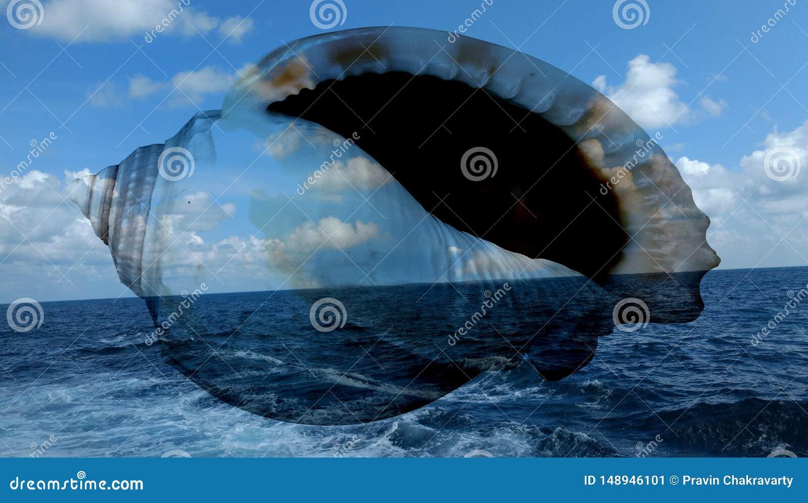 La mer d ?t? ?cosse le fond wallpaper