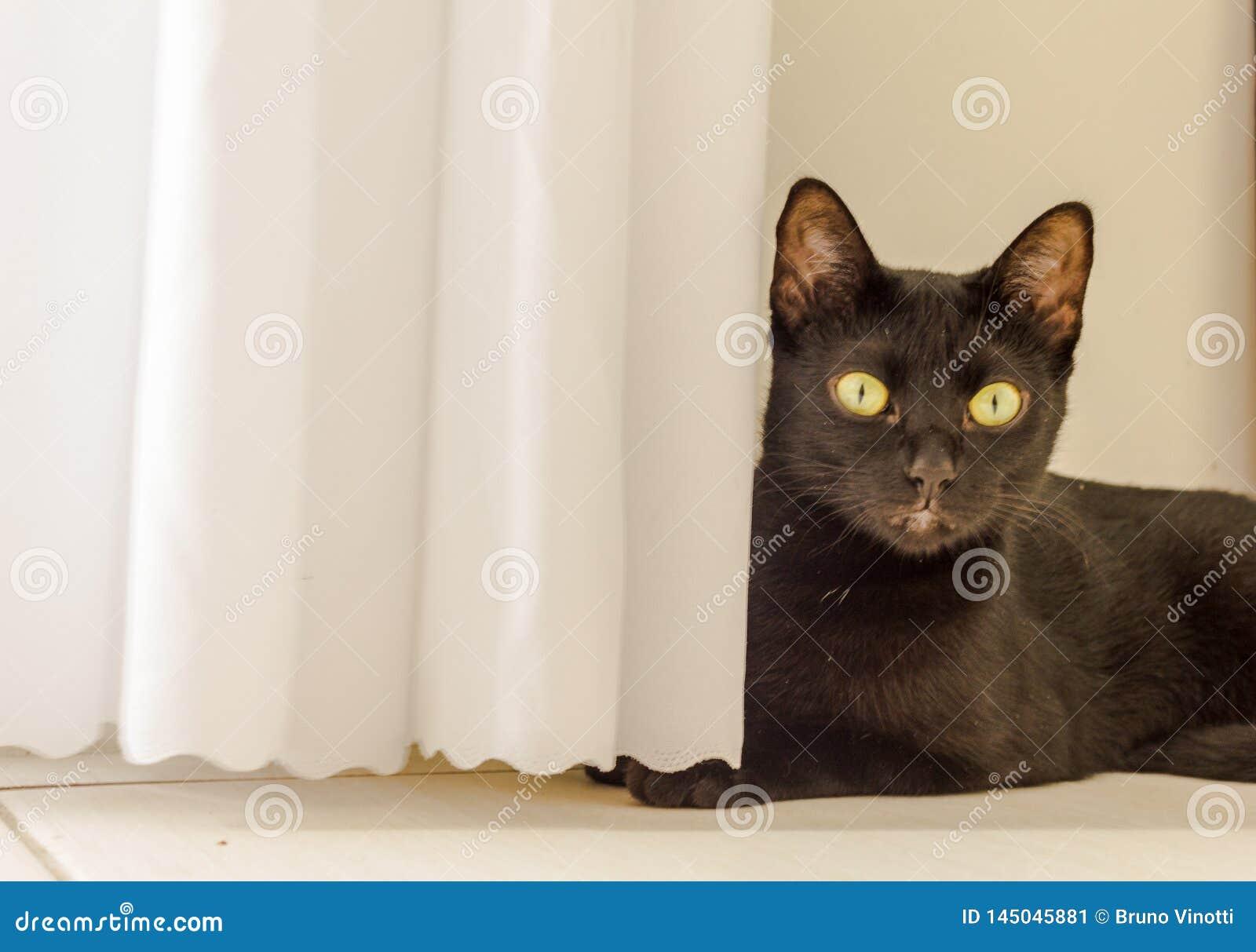 LA MIRADA DEL CAT OBSERVA YELOW