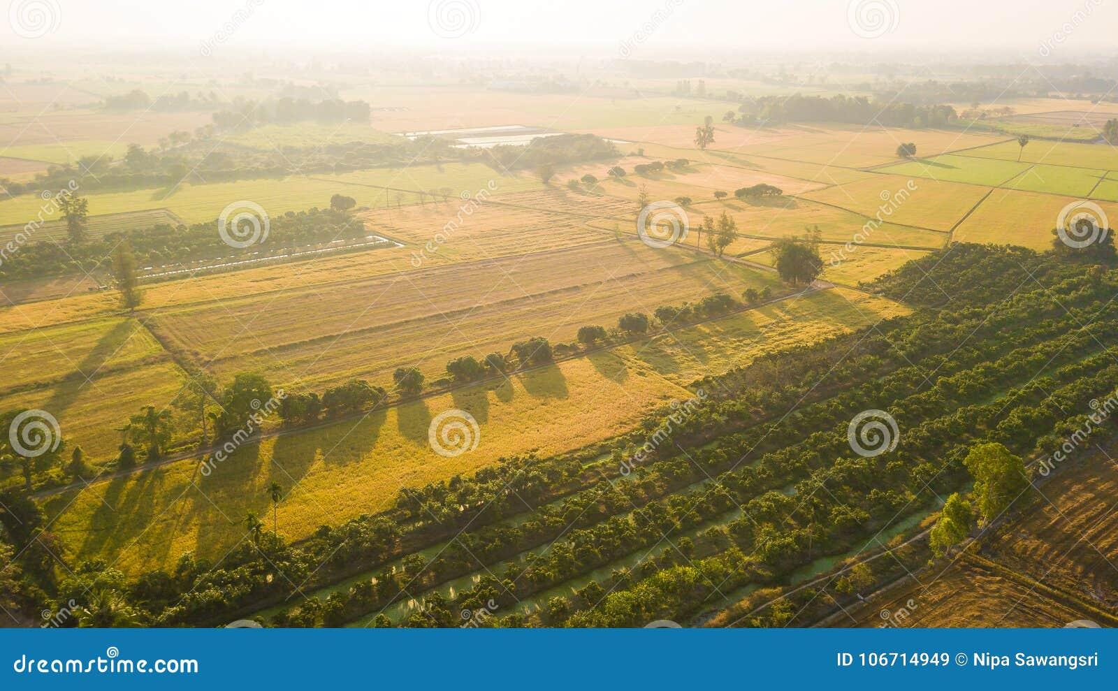 La mise en valeur de sol de champ en vue de l ensemencement ou du plantin