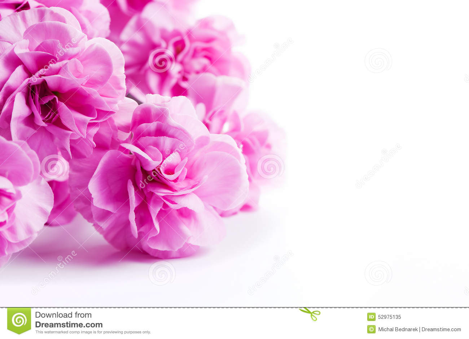 La molla morbida rosa fiorisce il mazzo su fondo bianco