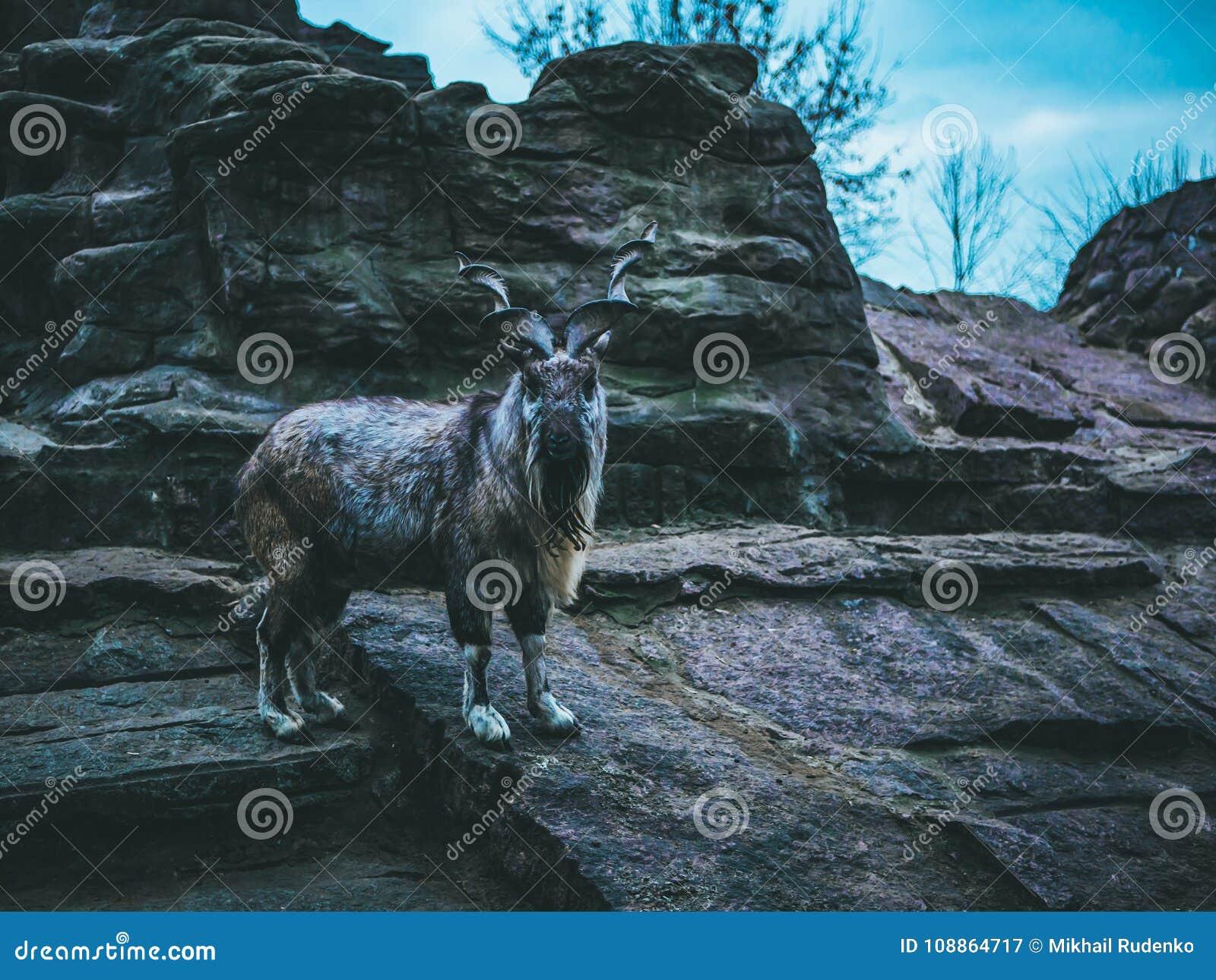 La montagna della capra lapida il cielo dell inverno della foresta di autunno