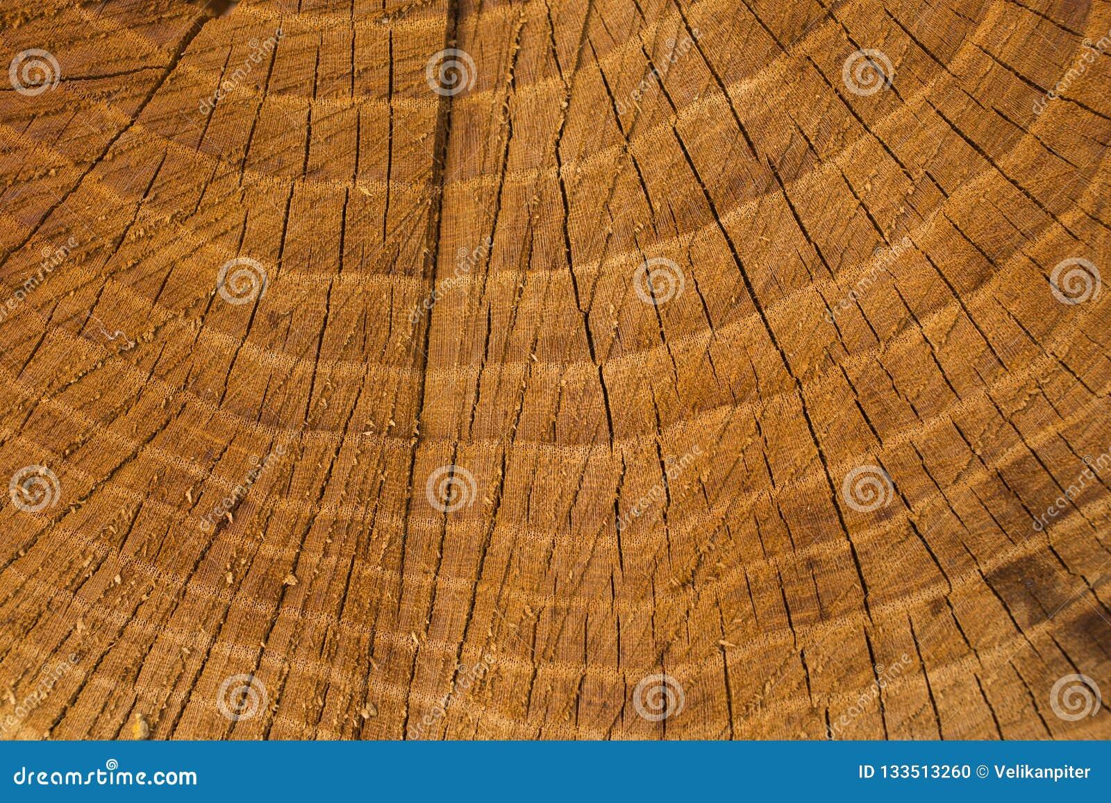 La mort d un vieil arbre La texture de l arbre dans le tronçon