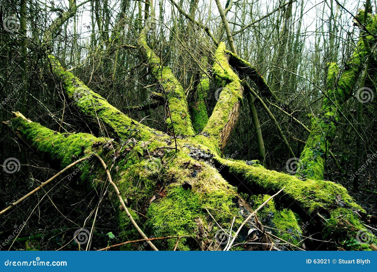 Download La mort dans le forset image stock. Image du vert, sinistre - 63021