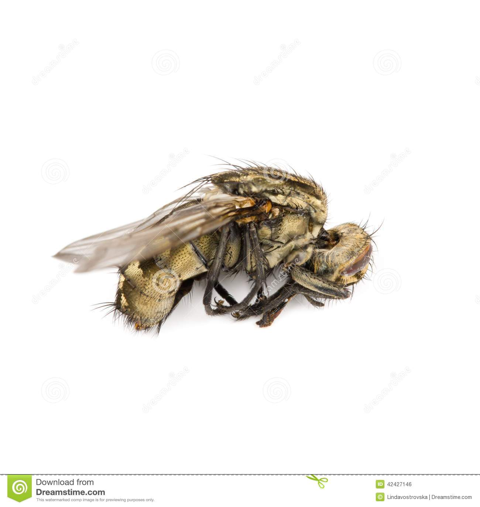 La mosca aisló