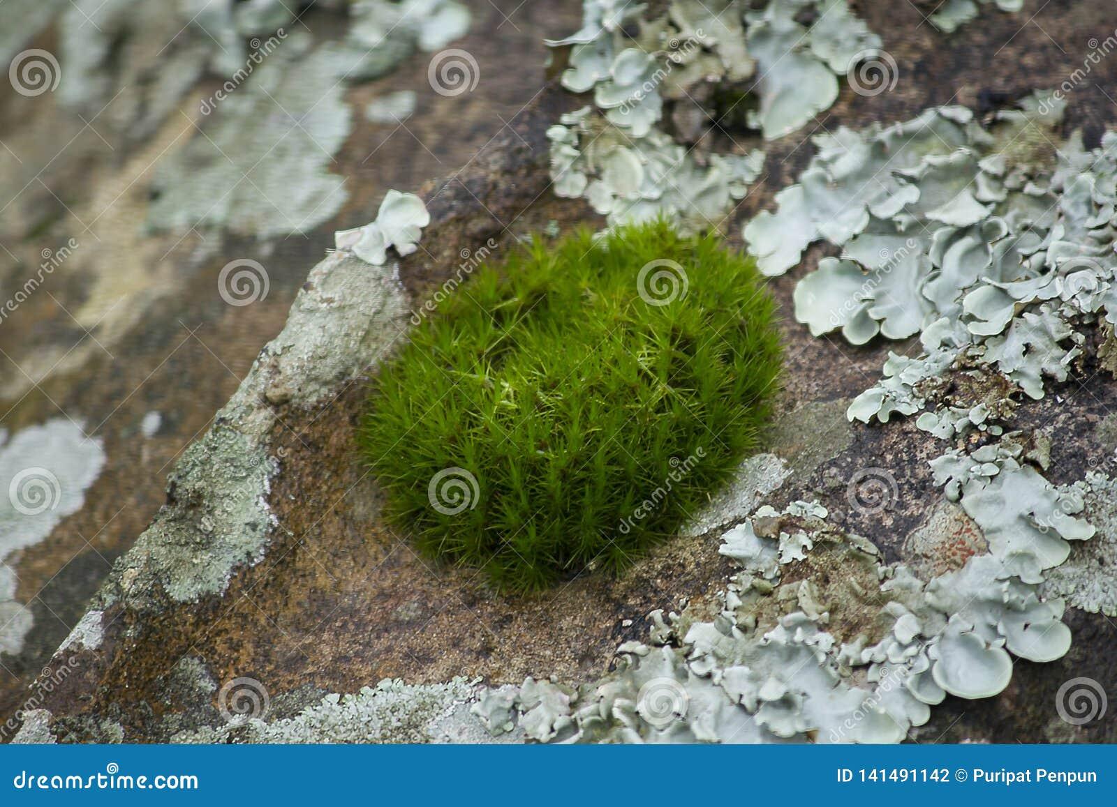 La mousse est sur un arbre dans l écorce avec l humidité