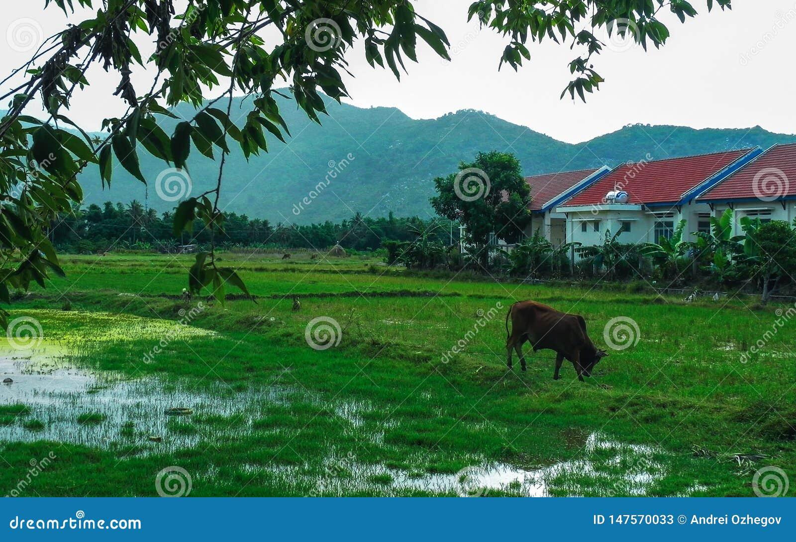 La mucca pasce il lago