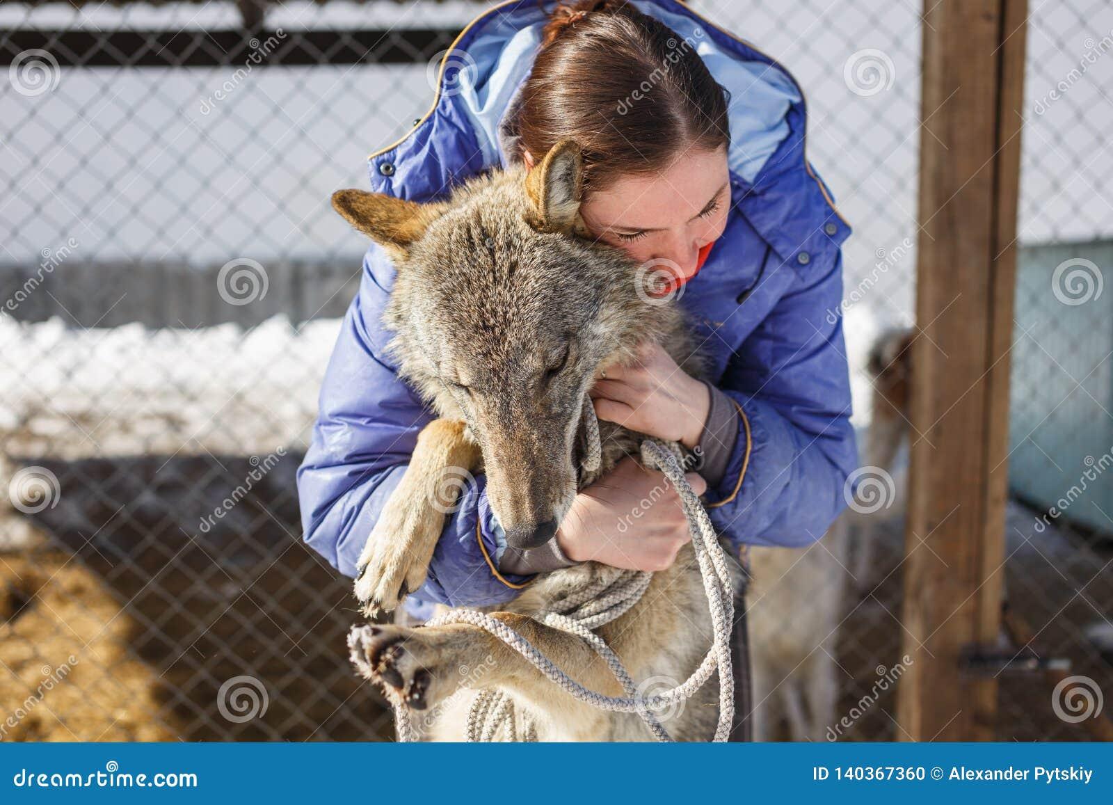 La muchacha abraza el lobo gris en la jaula al aire libre con los lobos y los perros