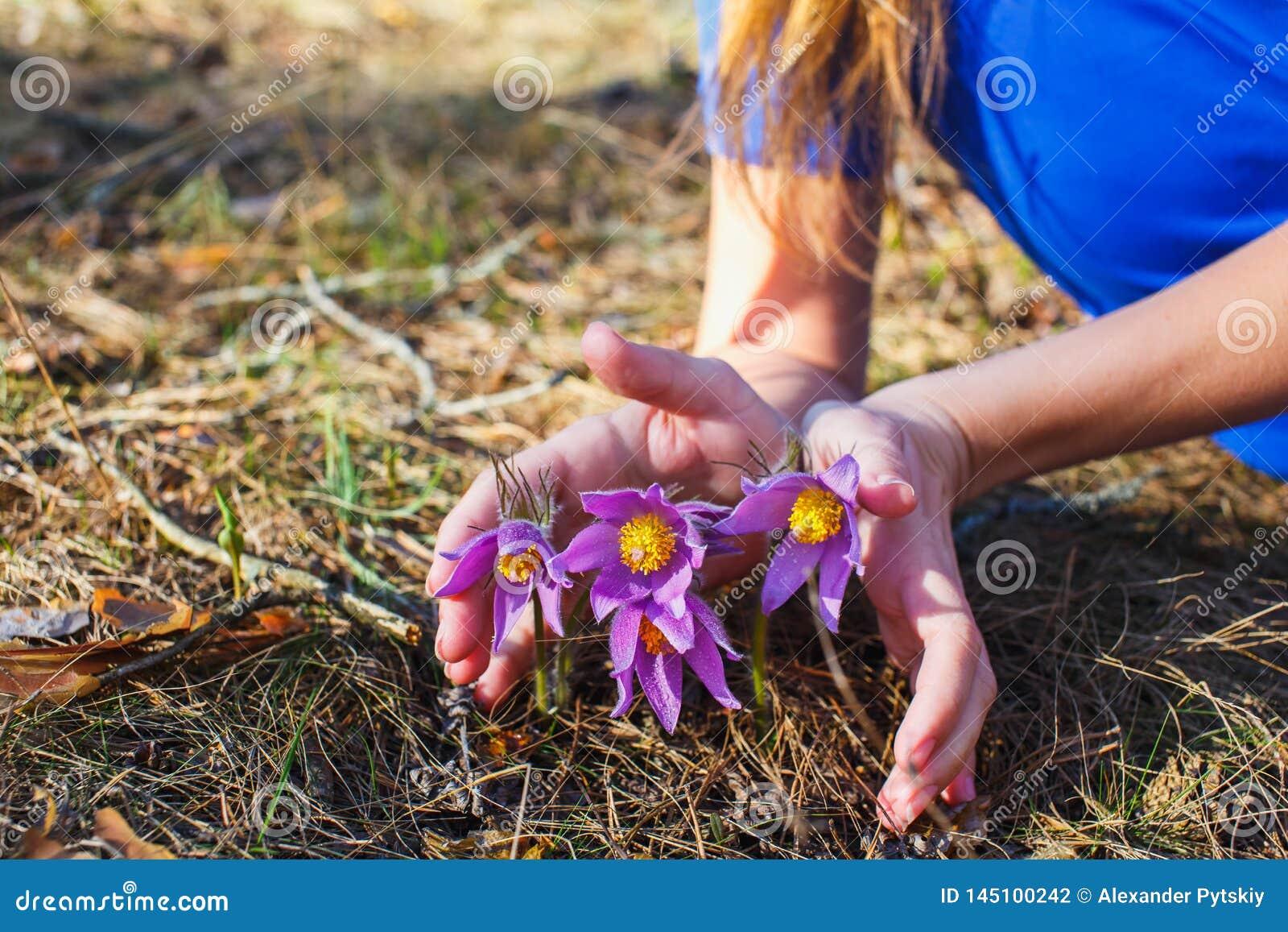 La muchacha está sosteniendo una hierba ideal