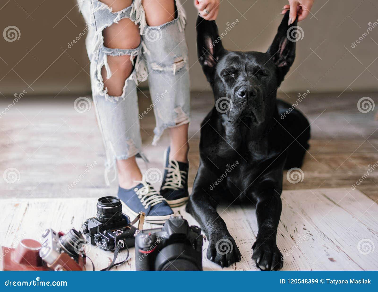 La mujer del inconformista se retrasa cerca de las cámaras digitales con un Labrador, concepto, forma de vida