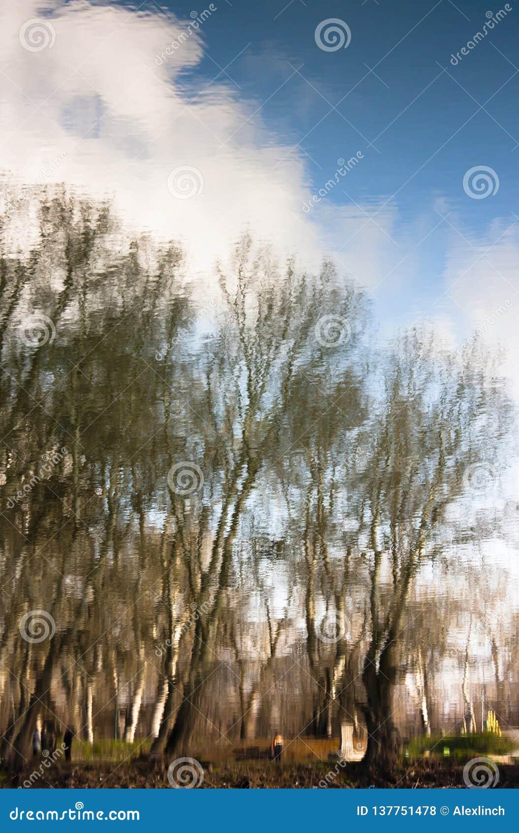 La naturaleza borrosa, árboles del parque reflejó en aguas de río