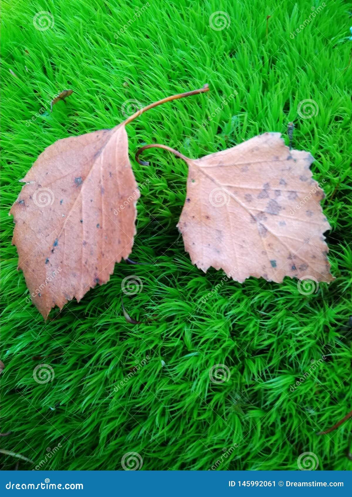 La nature de mousse de feuilles d automne tombe endormi