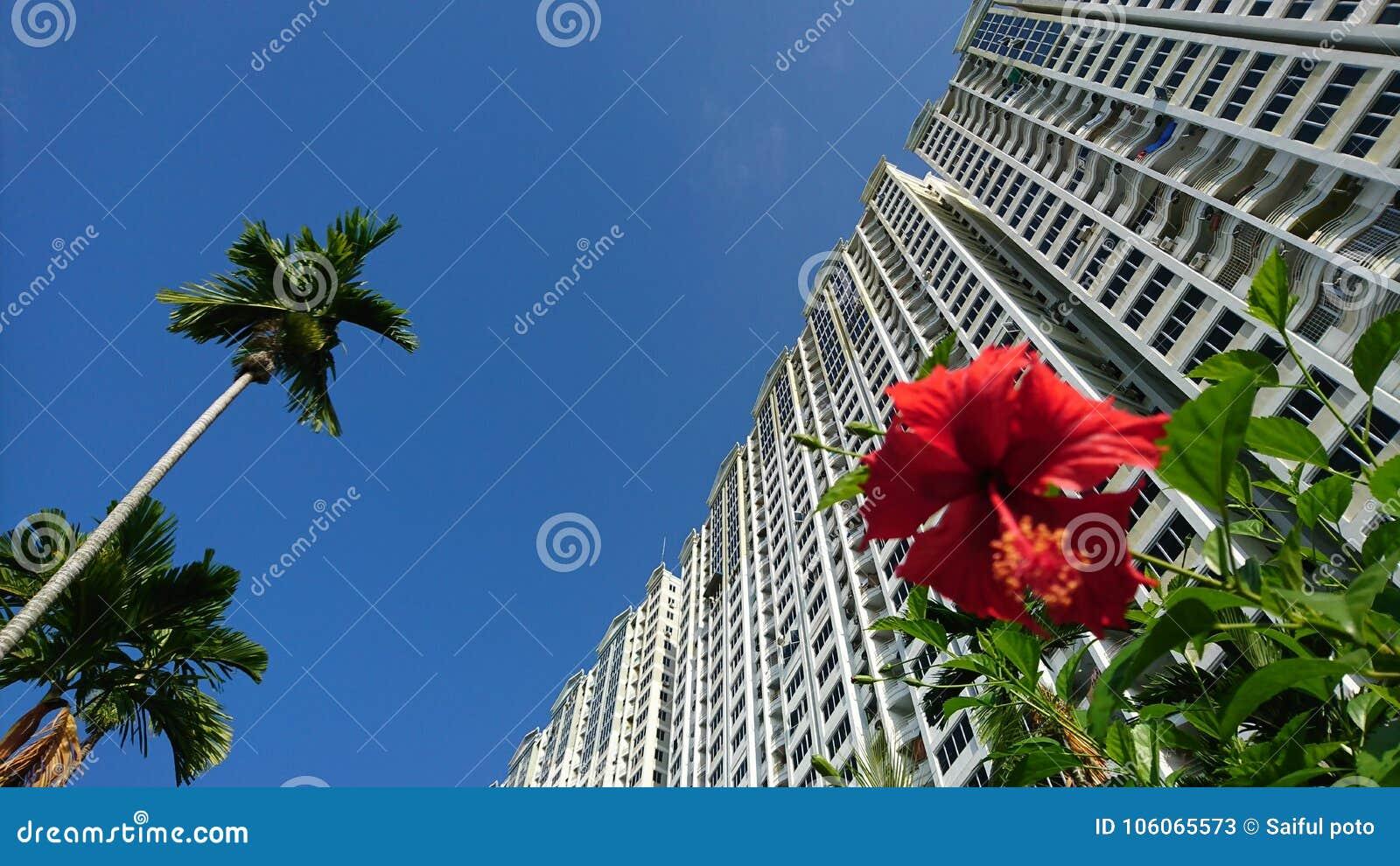 La nature est un concept urbain de nécessité, des fleurs, un arbre et un viee gentil