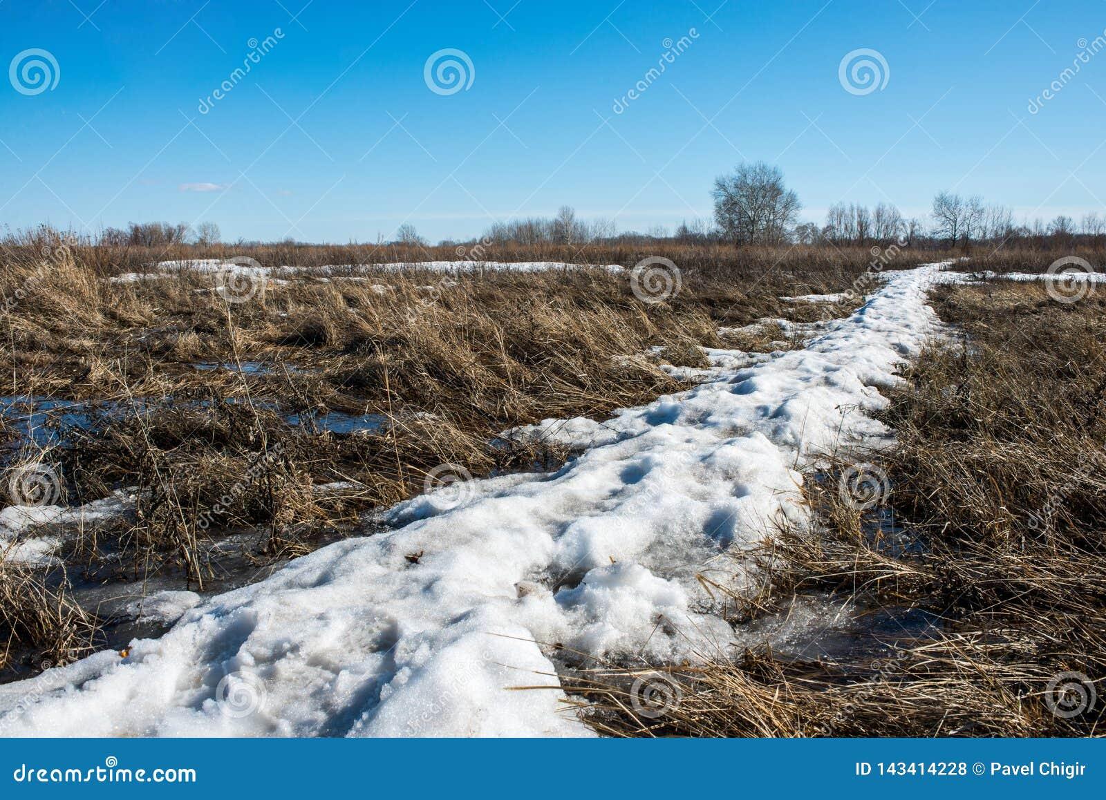 La neige fond et l eau accumulée de fonte forme un marais