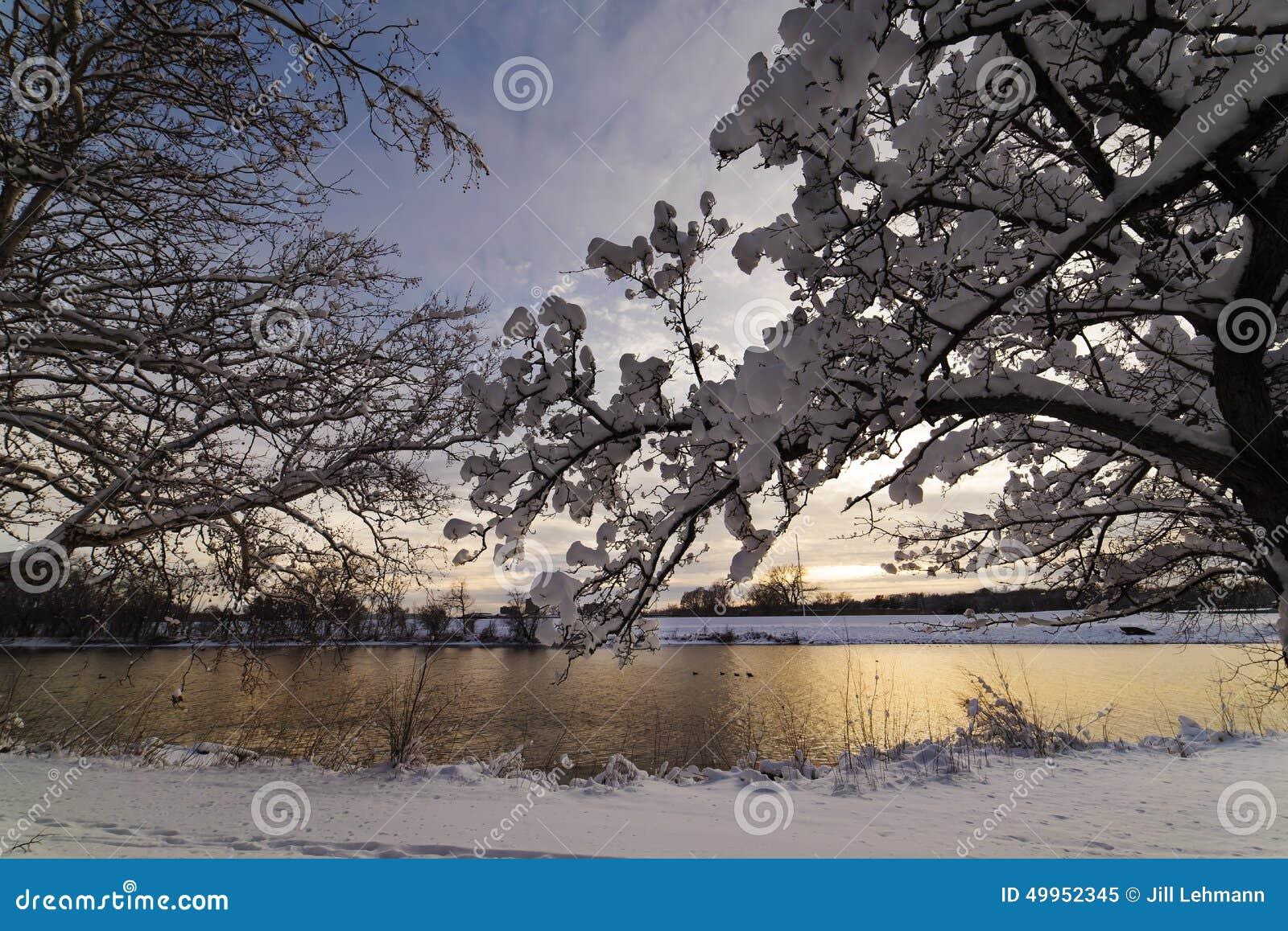 La nieve cuelga en árboles después de una tormenta