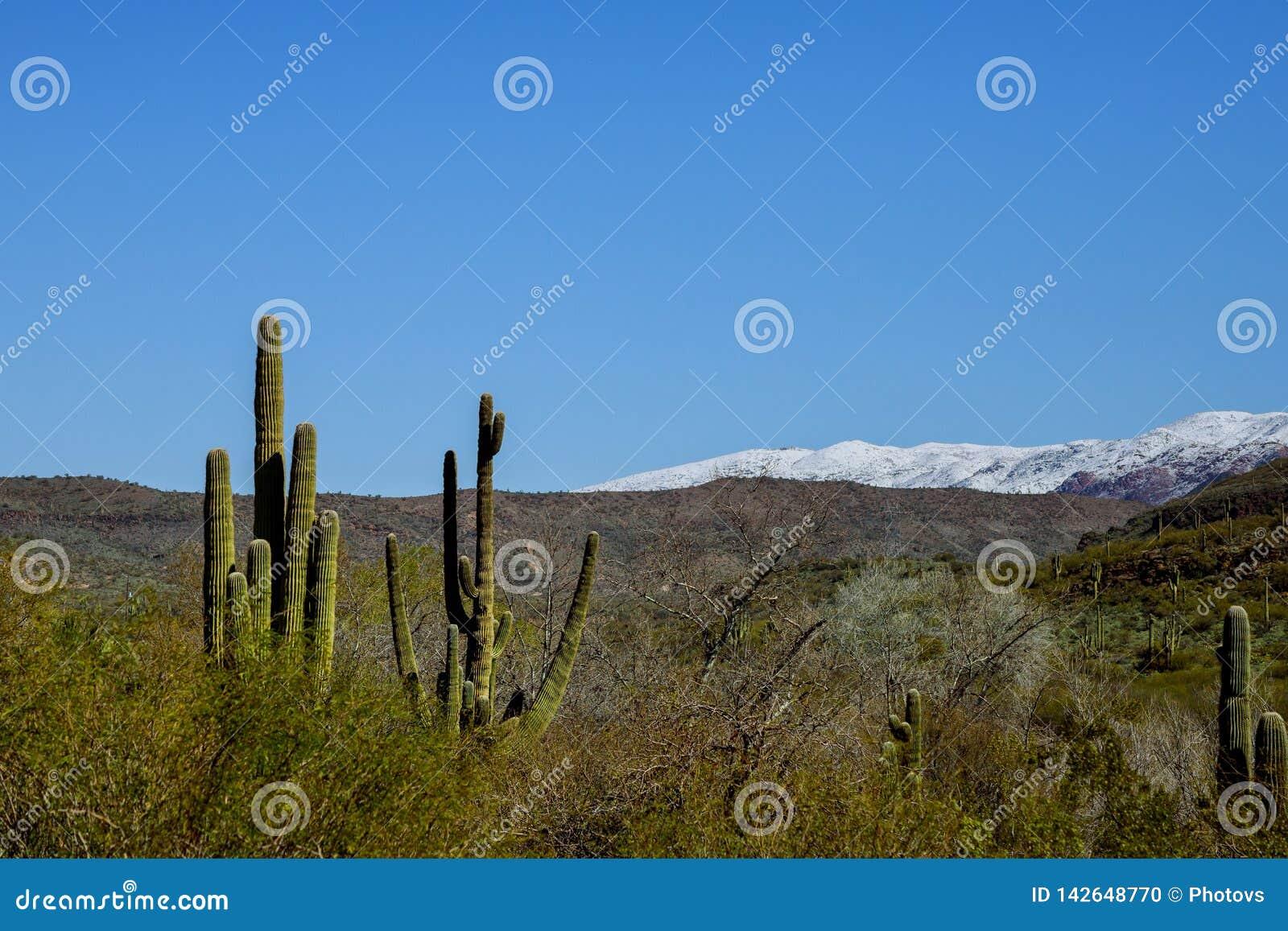 La nieve en el desierto de Arizona, al norte de Tucson, Arizona un acontecimiento del tiempo trajo las nevadas a las montañas co