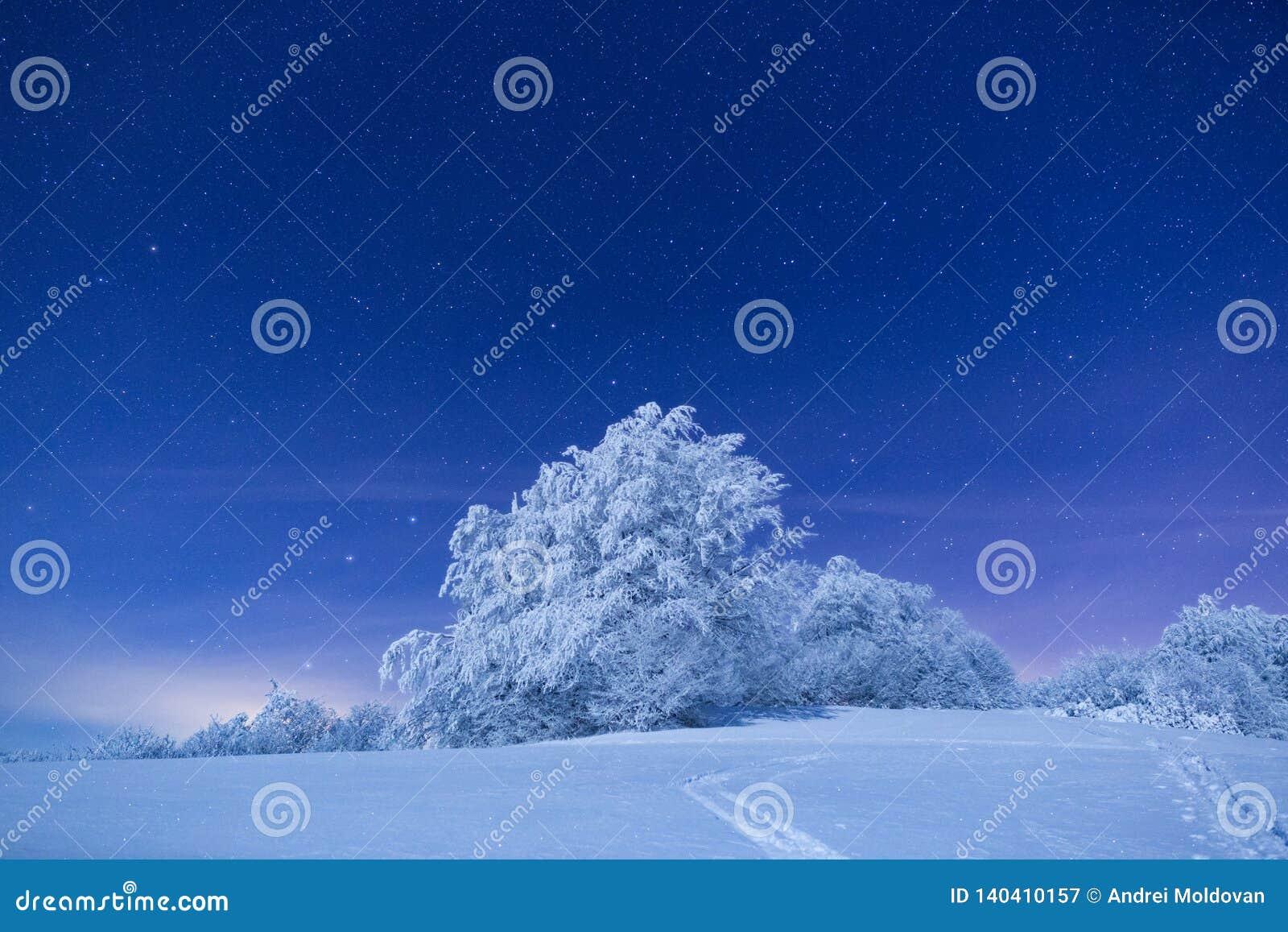 La observación de un bosque en invierno durante la noche es una de la cosa más hermosa que una puede hacer en las montañas