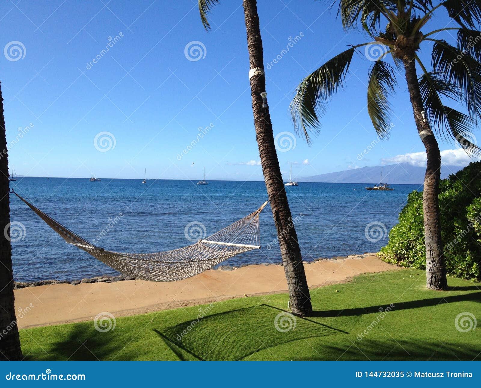 La opinión de Maui