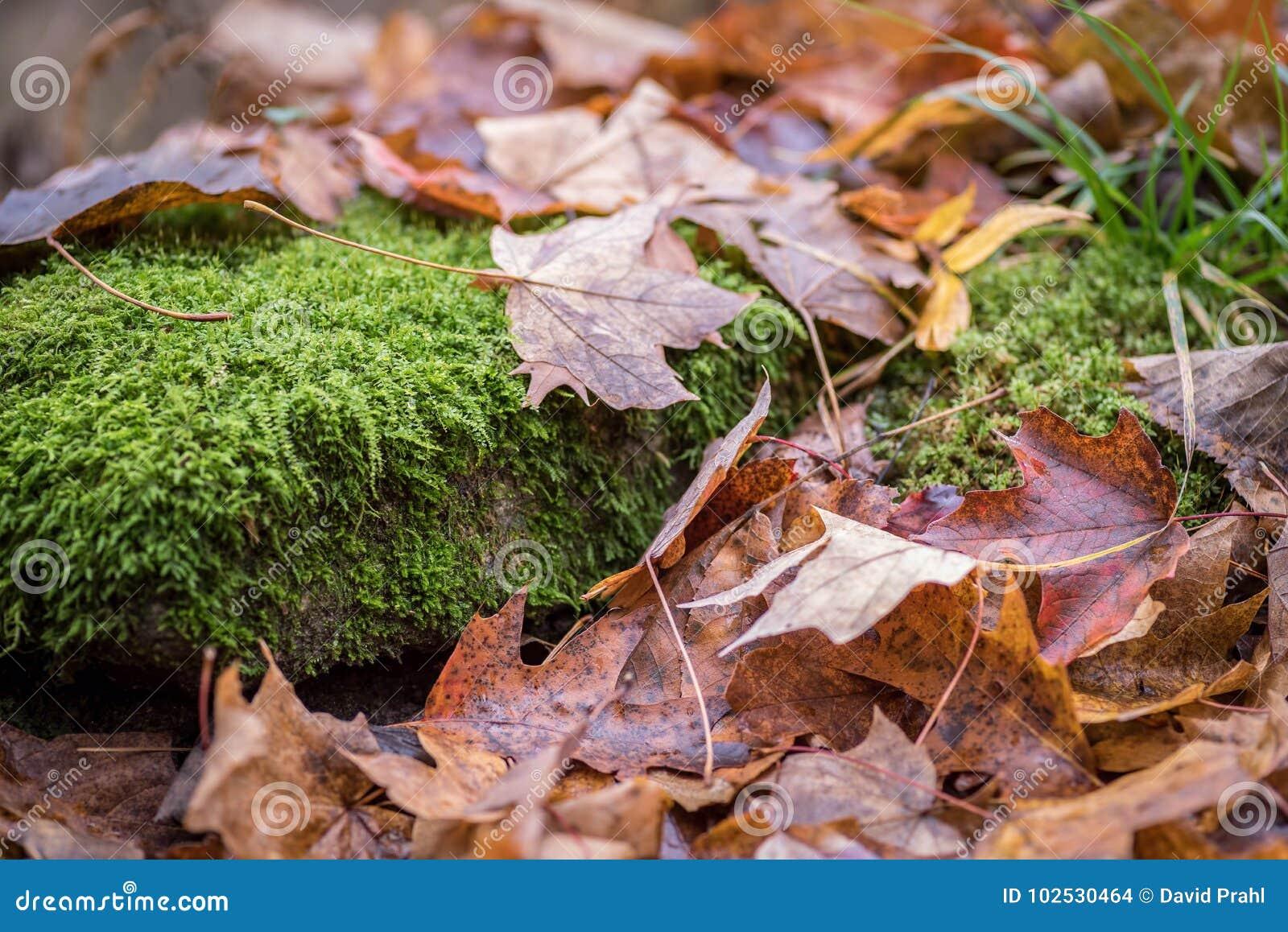 La opinión de nivel del suelo del primer de la caída deja la colocación en piso del bosque