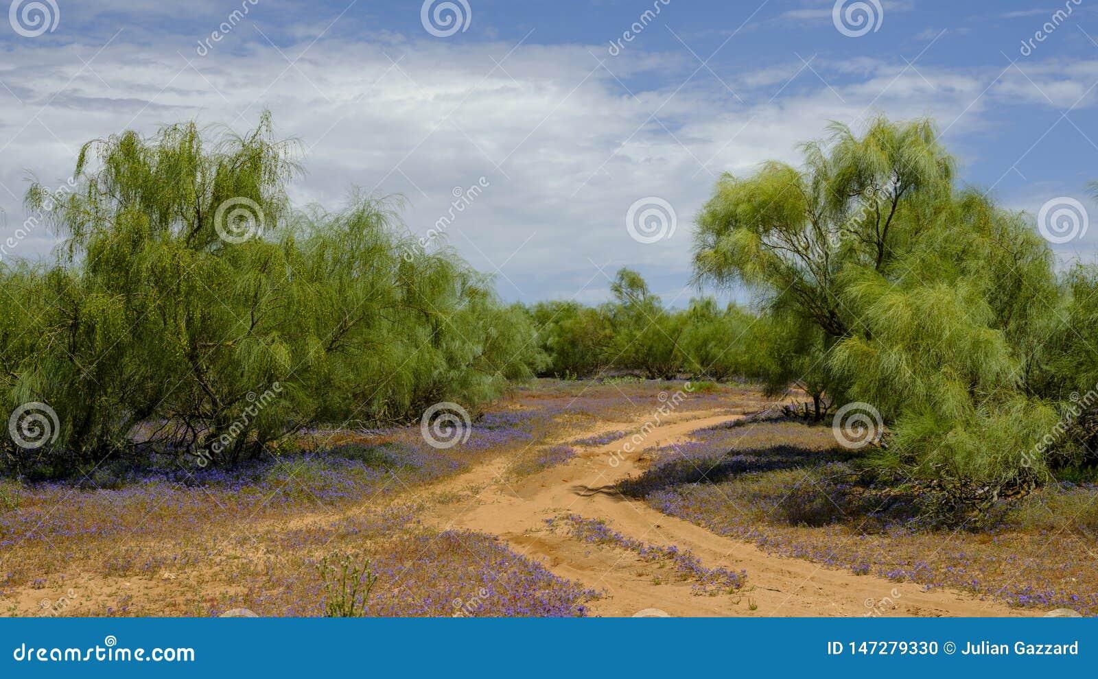 La opini?n el natural friega la flor espa?ola de la cubierta de tierra de las campanillas de maderas, cerca del Castile de Dona B