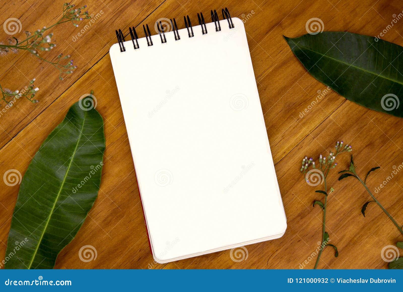 La pagina in bianco del cuscinetto di schizzo con l erba e la foglia sul piano d appoggio di legno rustico osservano la foto Sfon