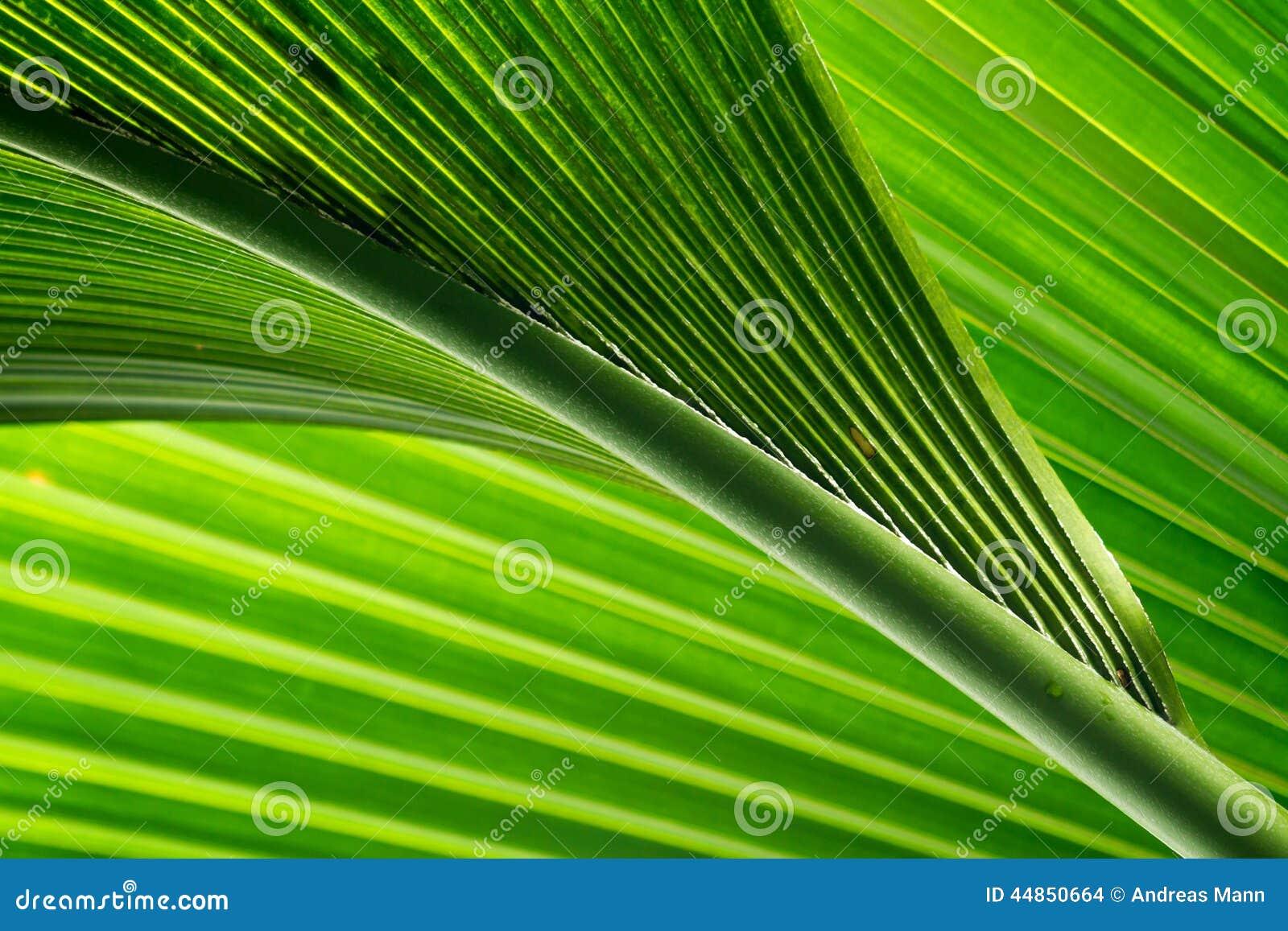 La palmera sale de III