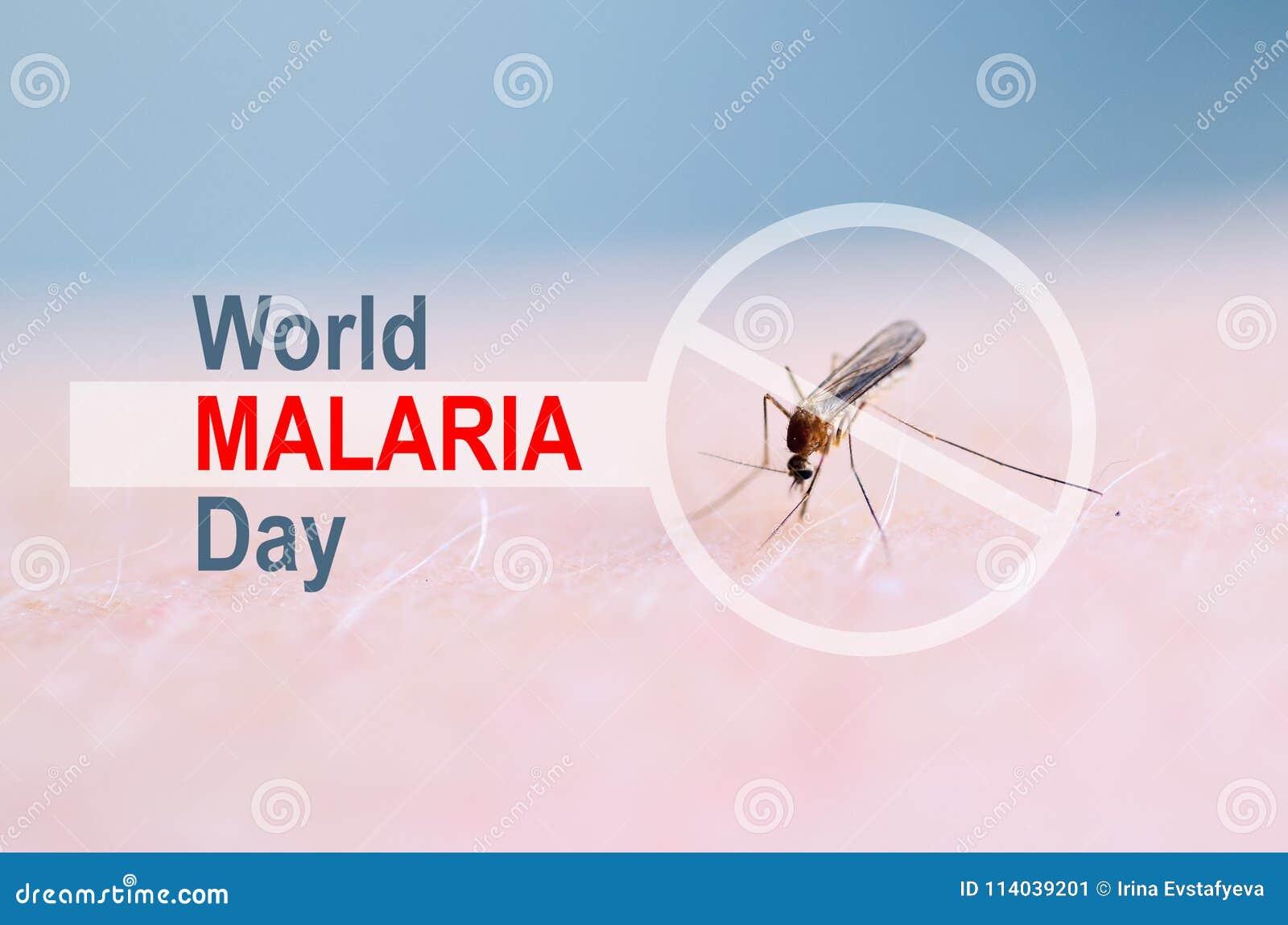 La parada, prohíbe la muestra en piel humana de la mordedura de mosquito, sangre humana en estómago del insecto Día de la malaria