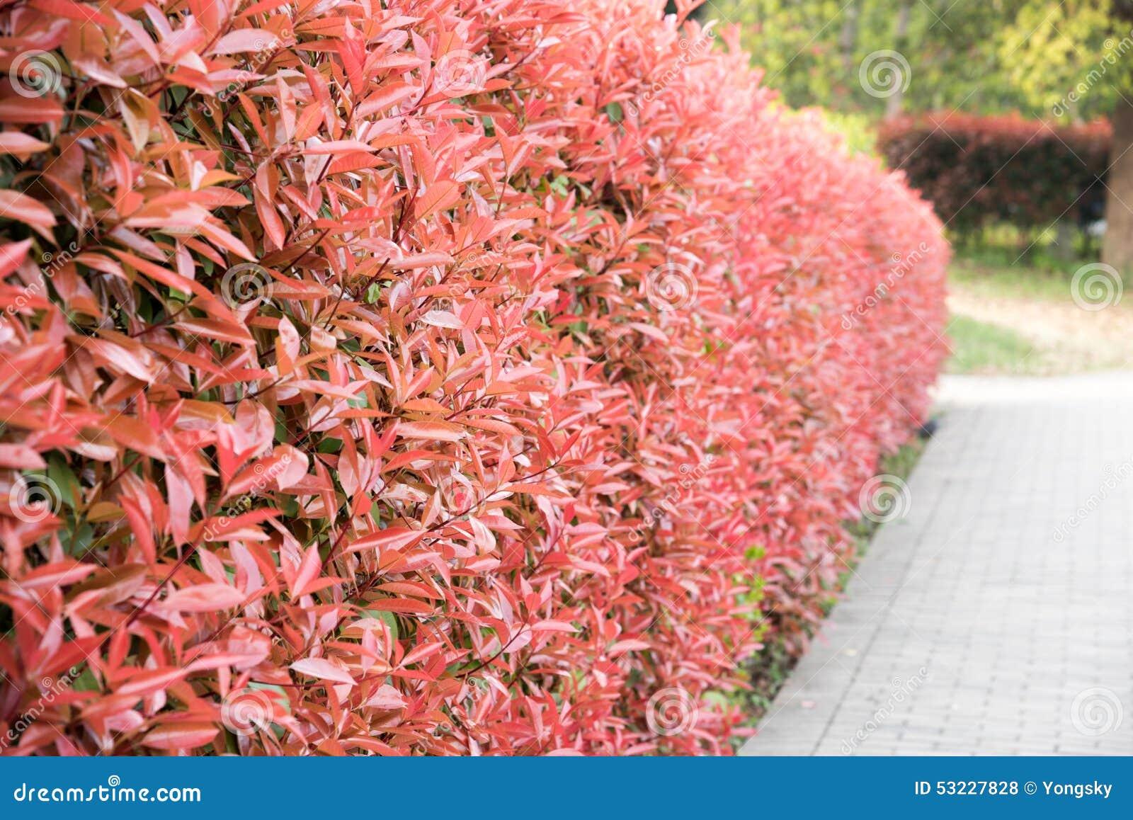 La pared roja de la planta