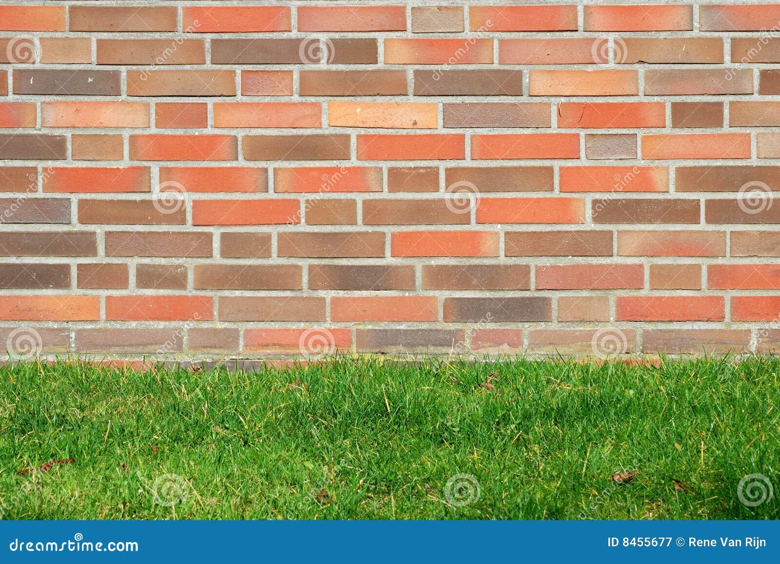 La pared y la hierba