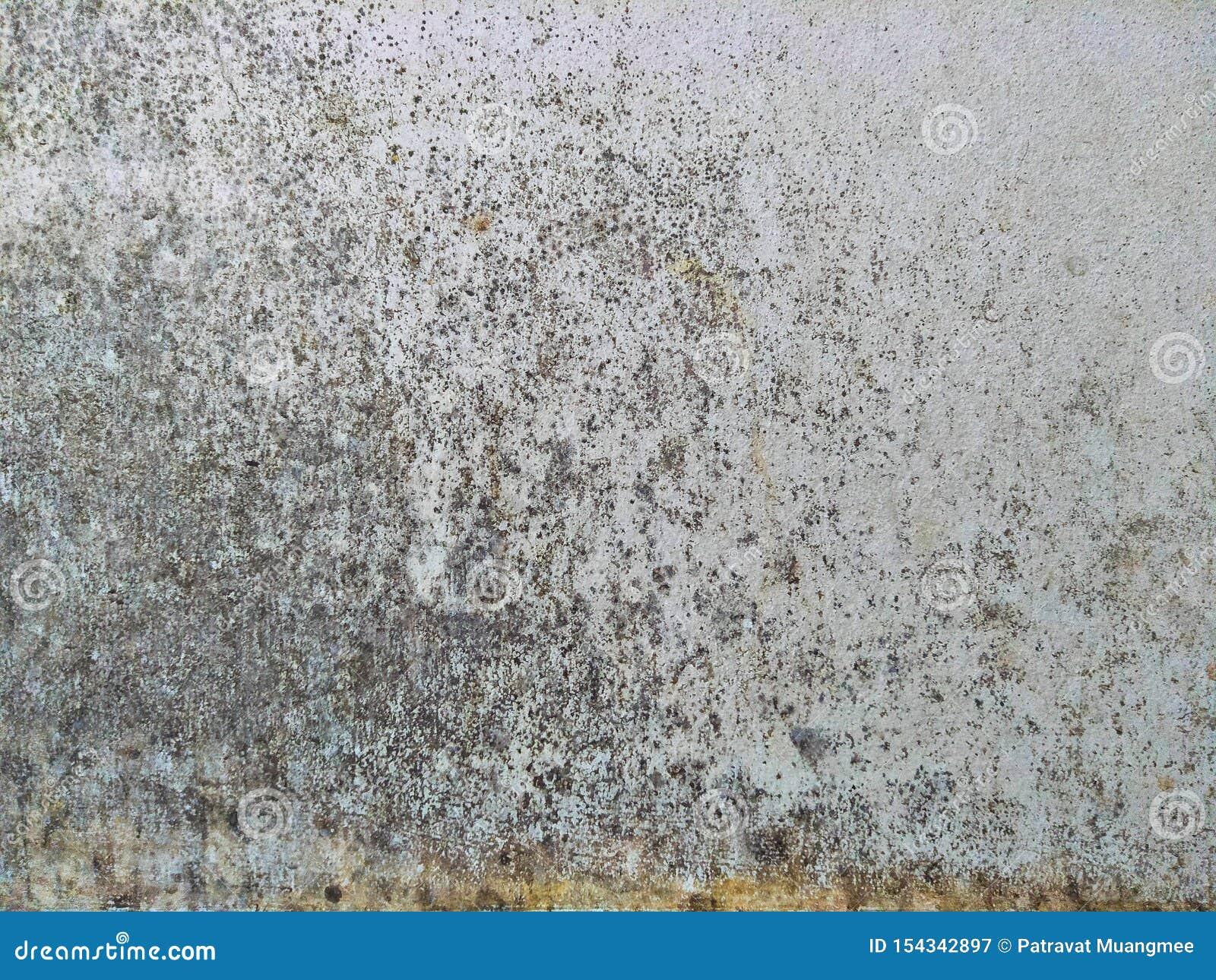 La parete bianca con la pelatura dei colori