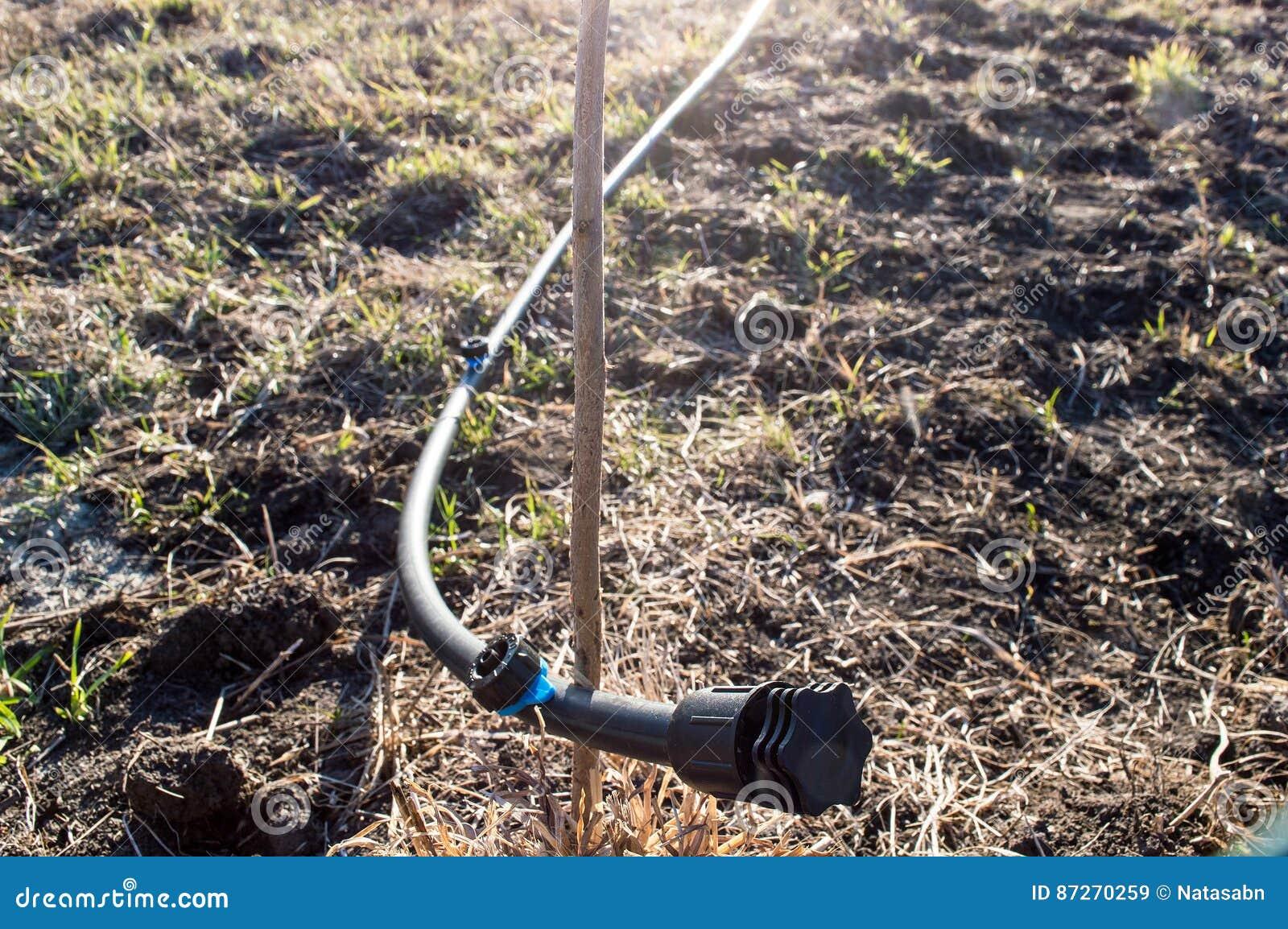 La Parte Iniziale Dell Intestino Per Irrigazione A Goccia