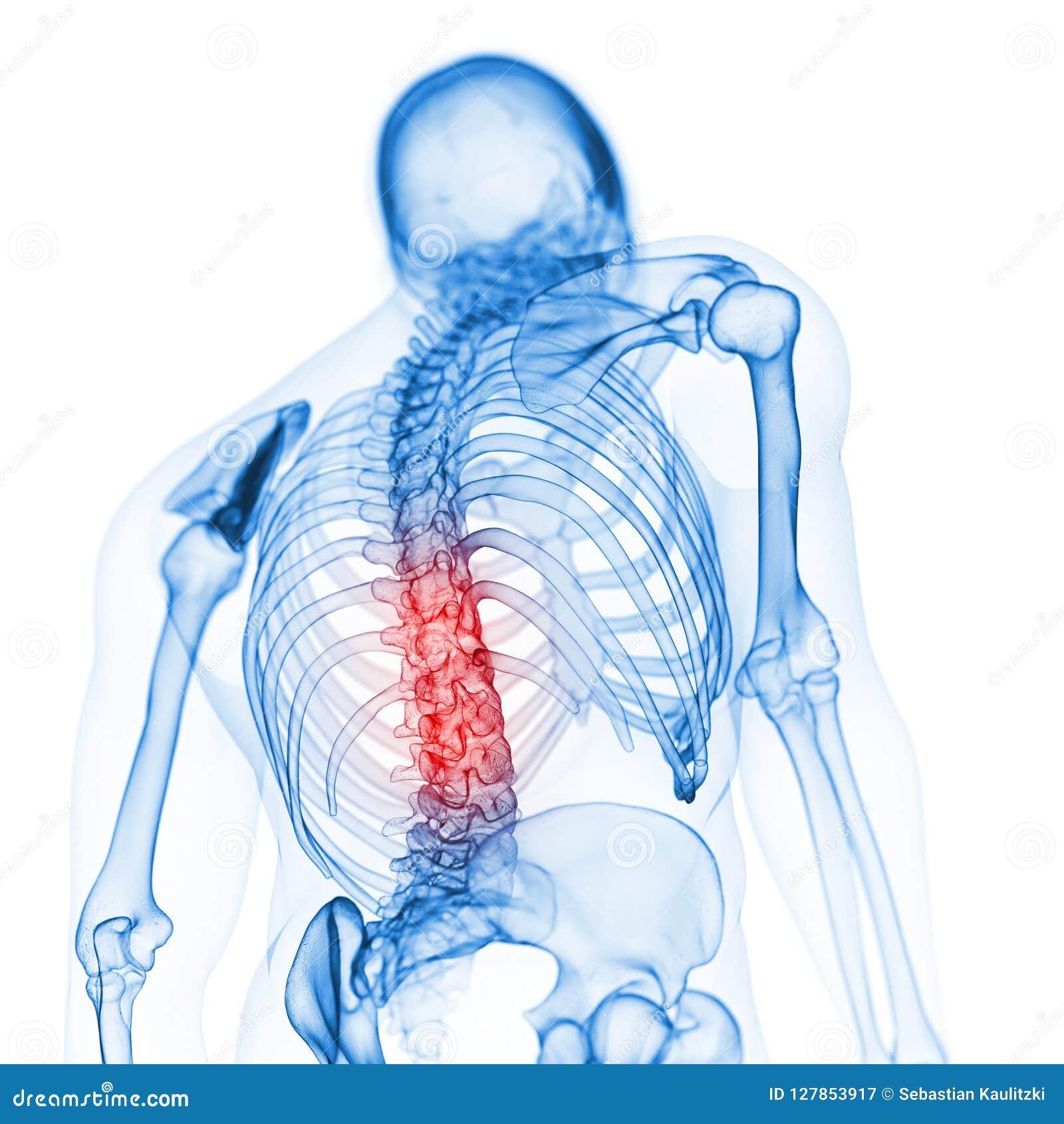 La parte posteriore scheletrica