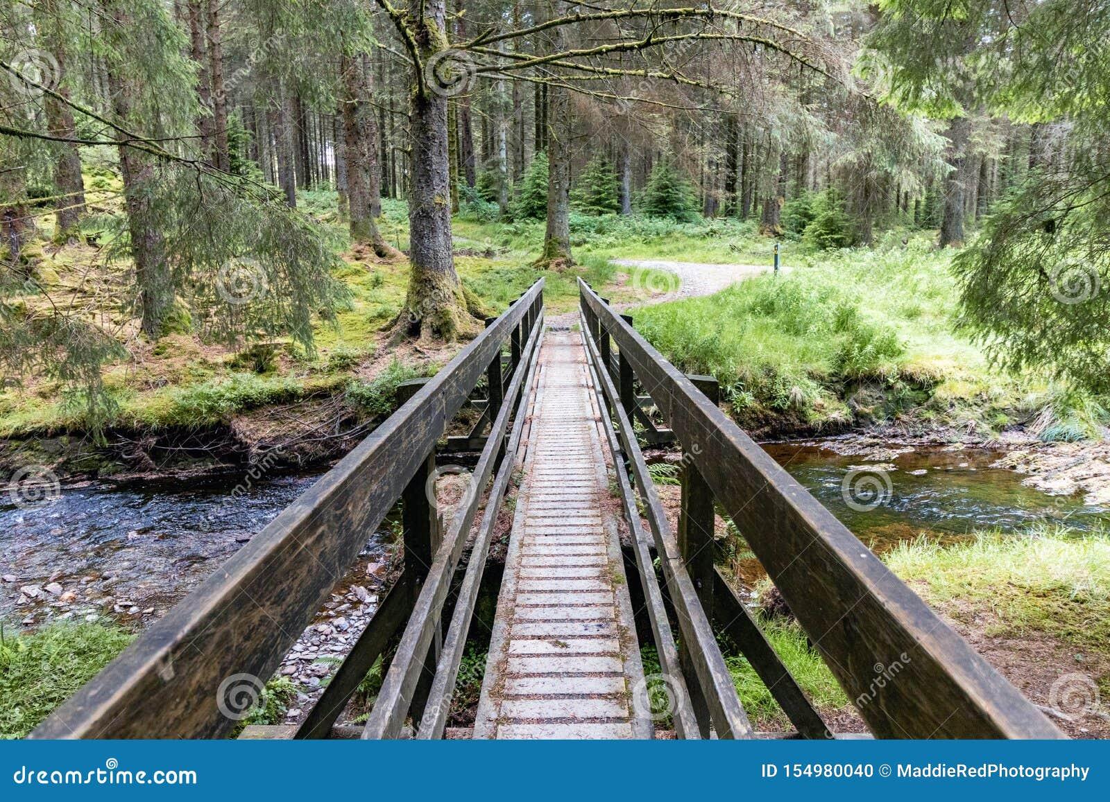 La pasarela sobre el río severn adentro hafren el bosque, País de Gales El puente es parte de un rastro que camina