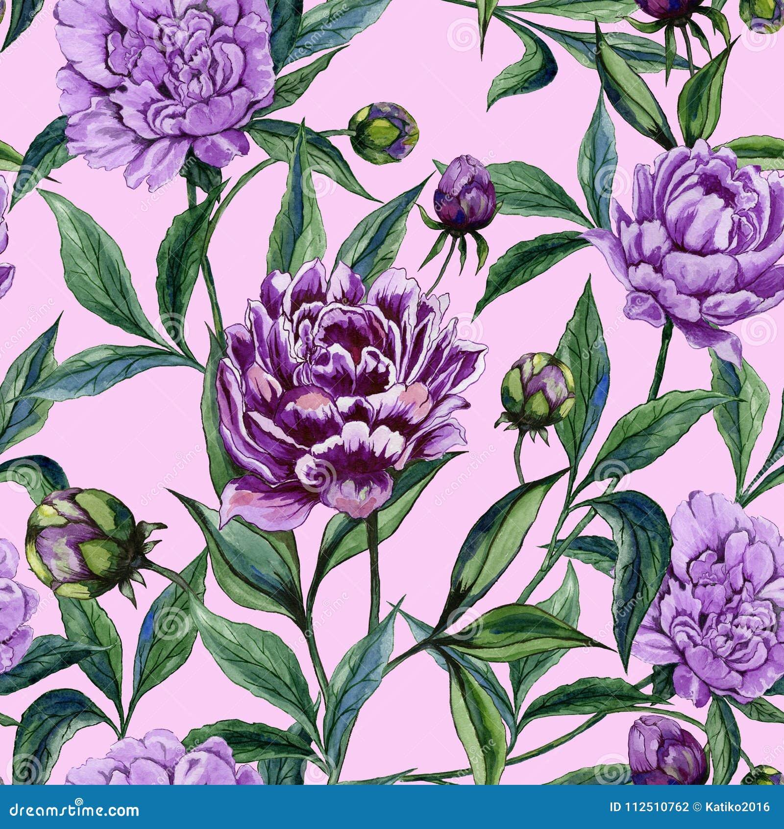 La peonía púrpura hermosa florece con las hojas verdes en fondo rosado Modelo floral inconsútil Pintura de la acuarela