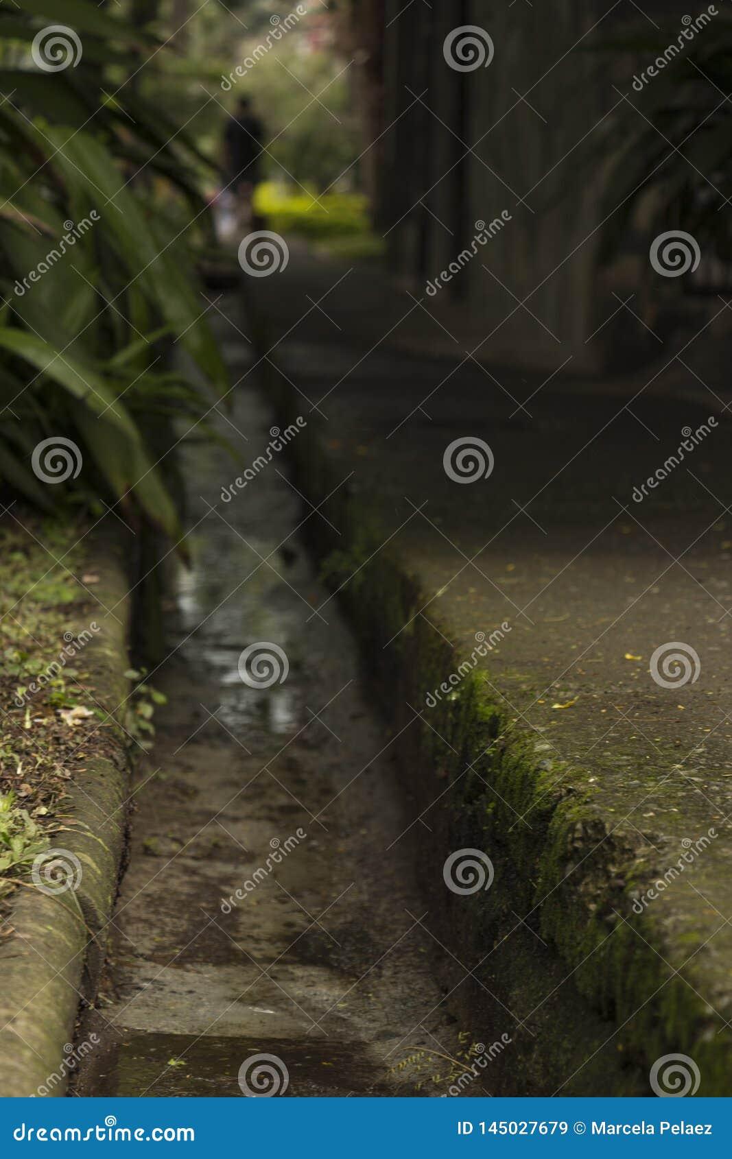 La persona y el animal doméstico que caminan hacia un túnel en una acera mojada y verde simboliza muerte y vida
