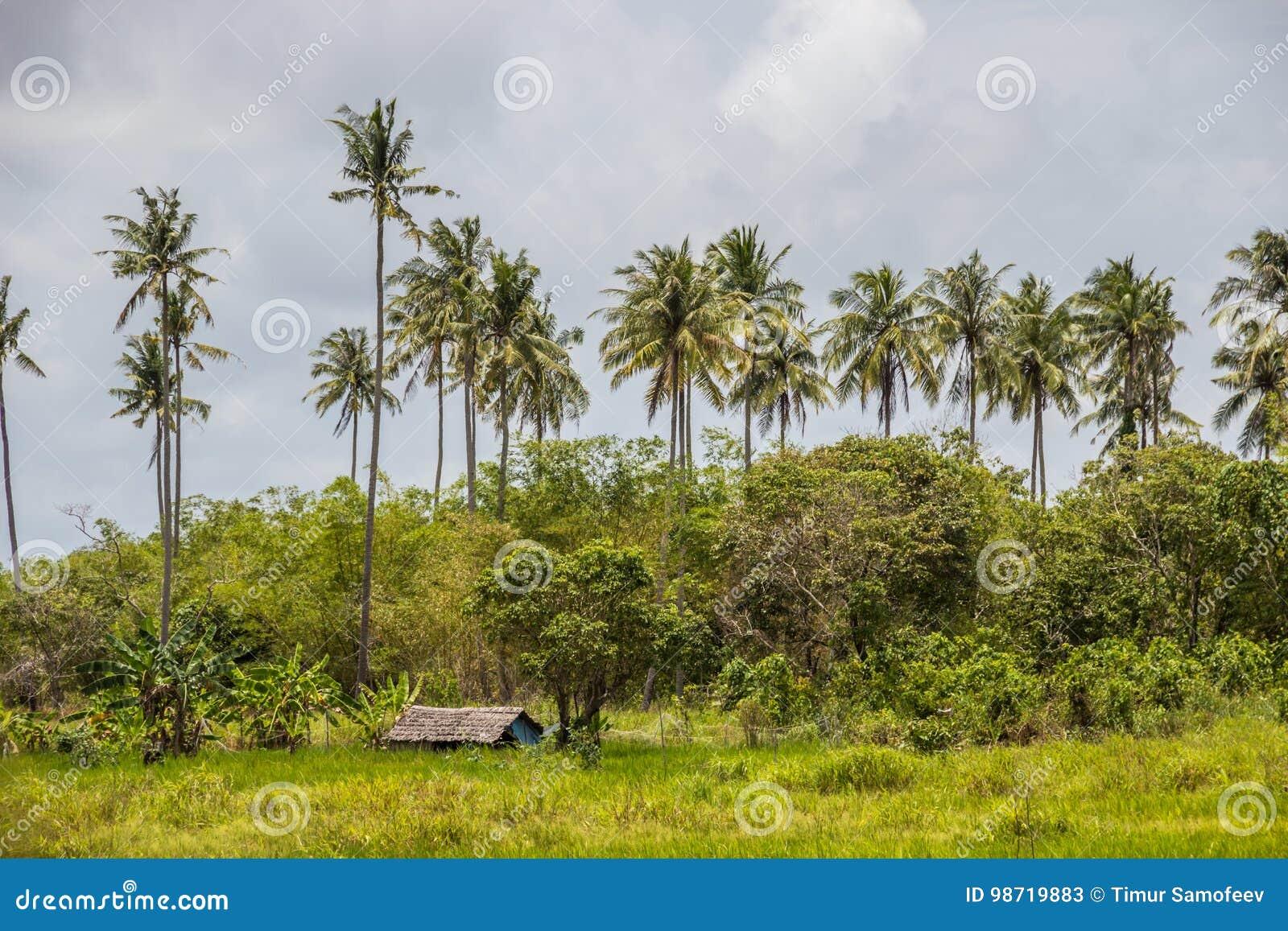 La petite hutte des matériaux de nature construisant dans des environmen verts