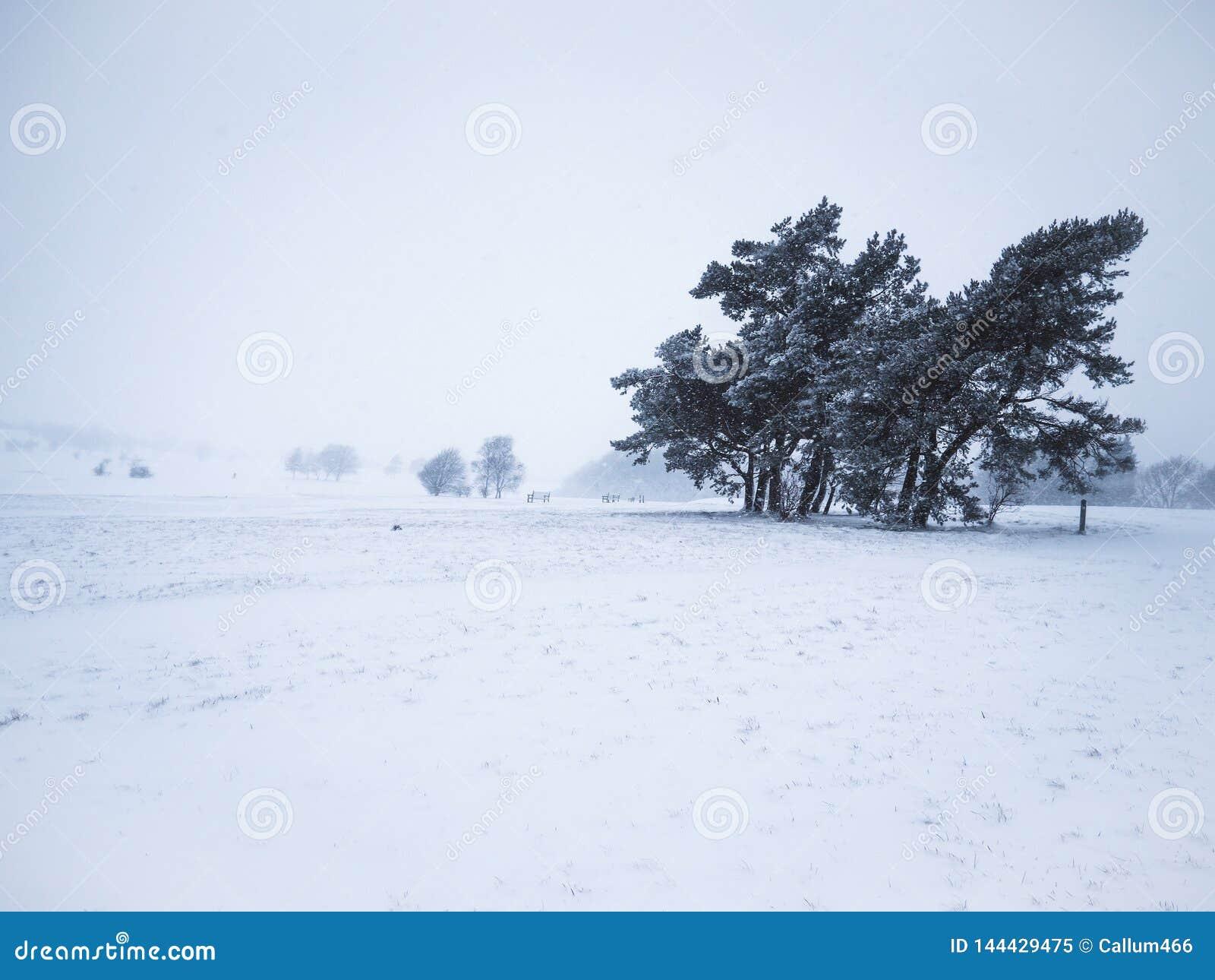 La petite neige a couvert des cannettes de fil de région boisée pendant l hiver