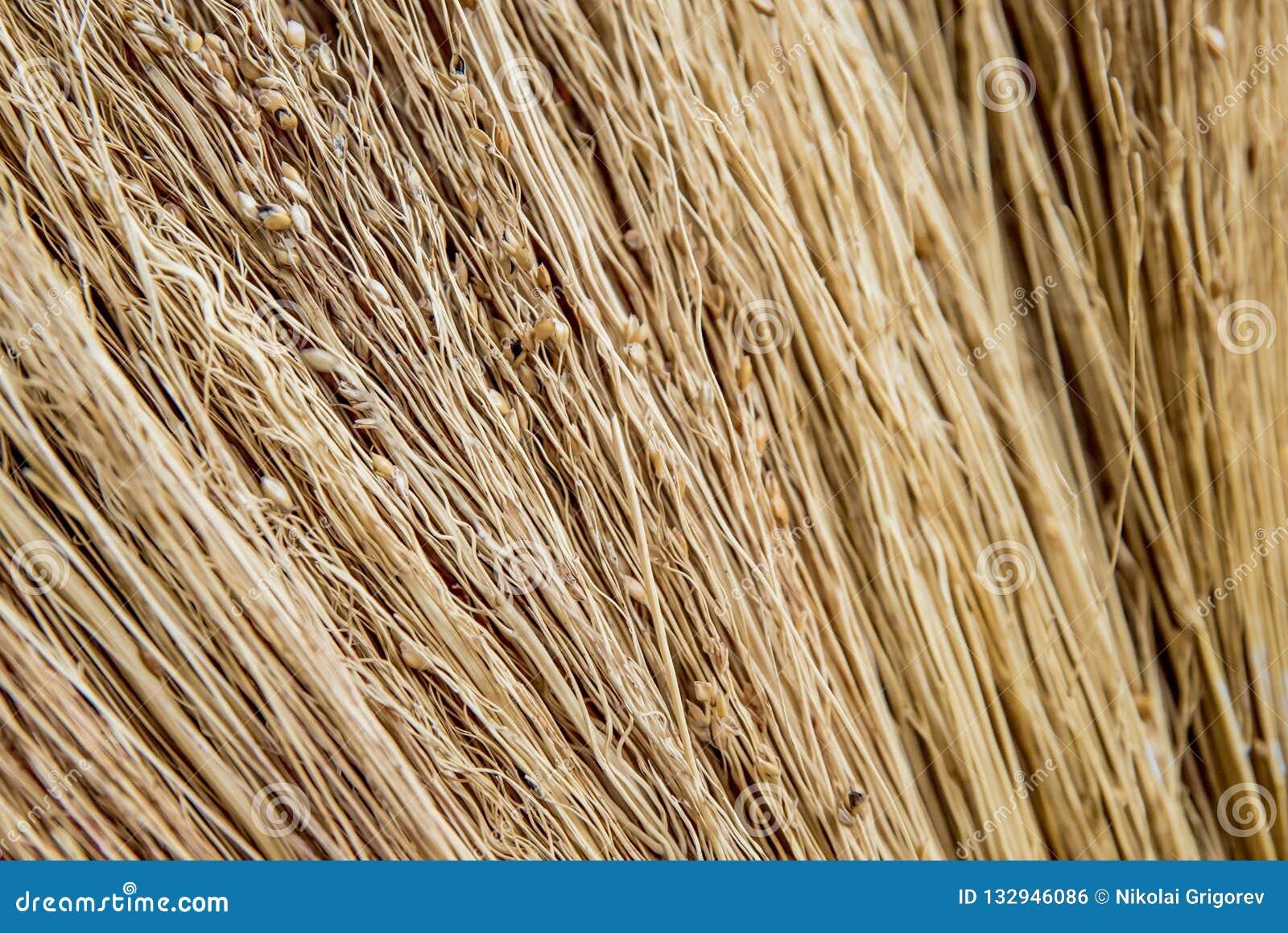 La photo de la texture de la paille sèche