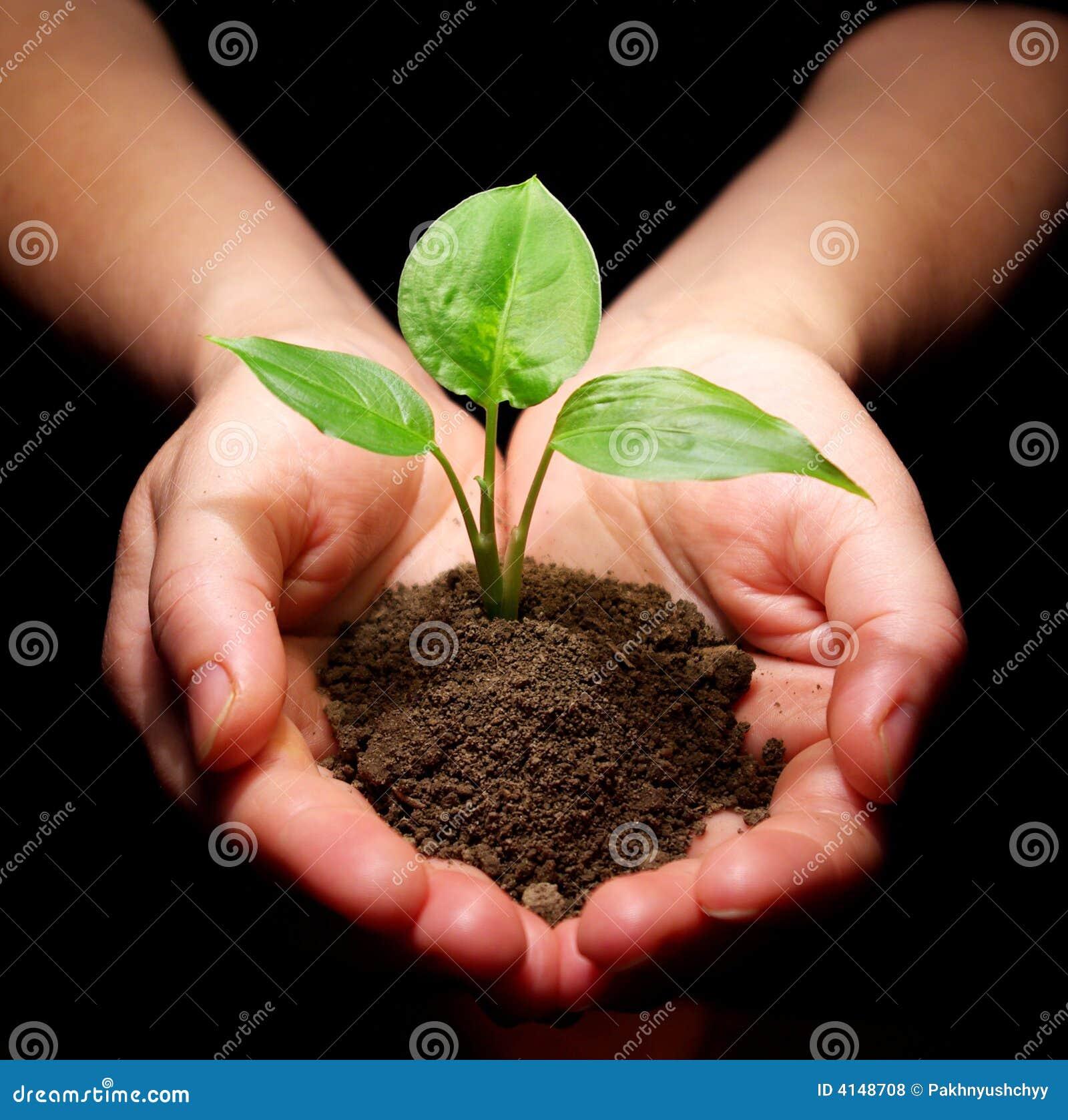 La pianta è in mani