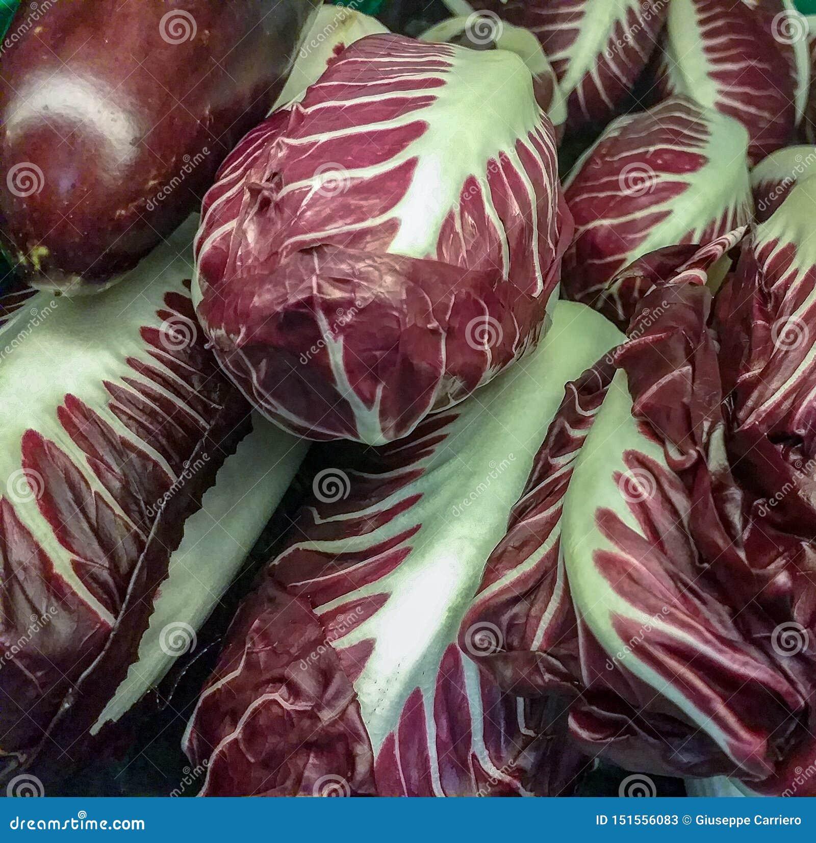 La pianta del radicchio, il nome scientifico Chicorium Intybus, appartiene alla famiglia composita, un gruppo di cicoria Al grupp