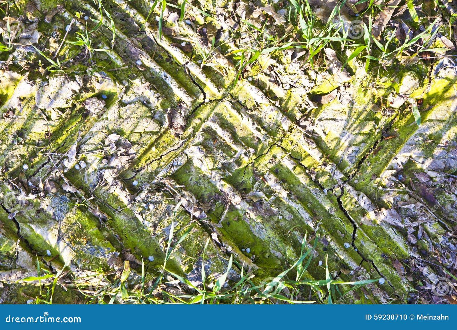 Download La Pista De Rueda Fango Adentro Secado Foto de archivo - Imagen de parque, marca: 59238710